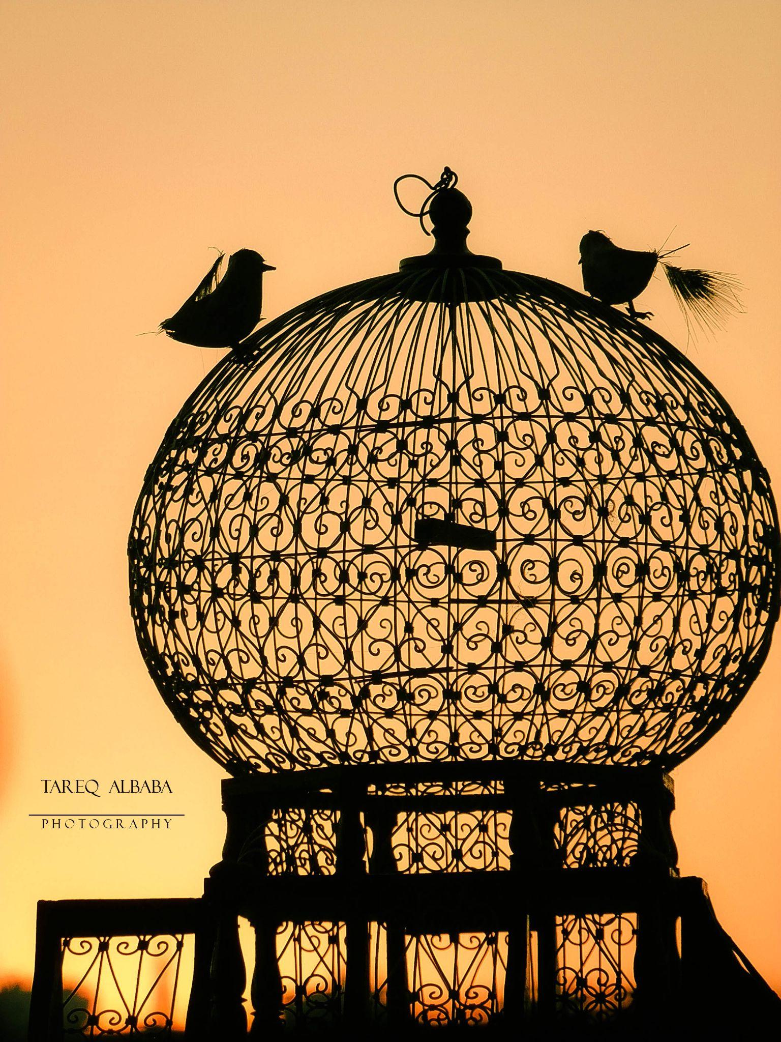 freedom  by Tareq Albaba