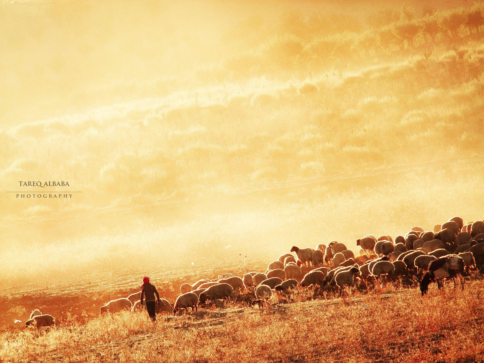 Lebanese-Syrian border areas | 16.9.2013 by Tareq Albaba