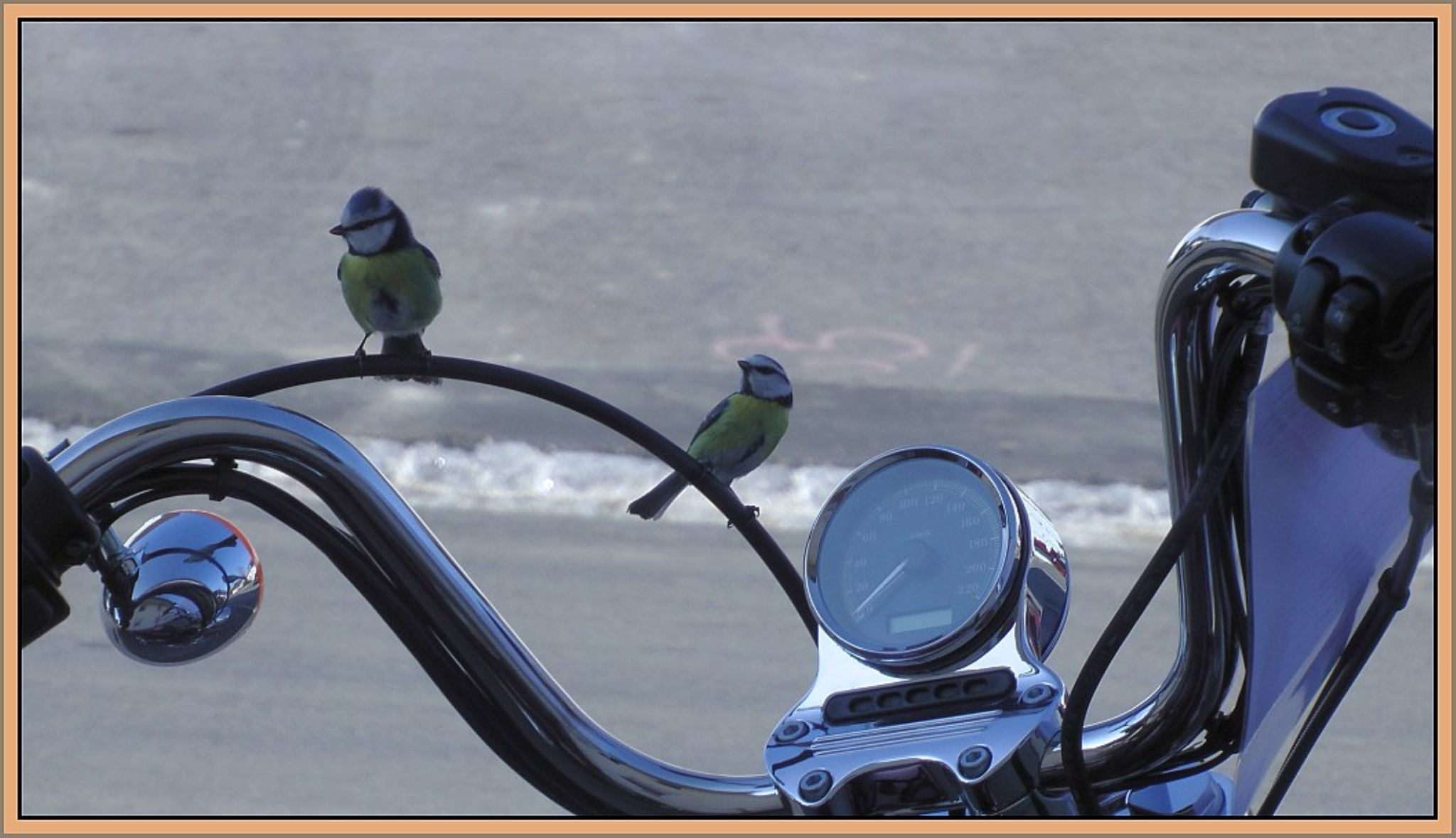 Vögel auf der Harley by maha