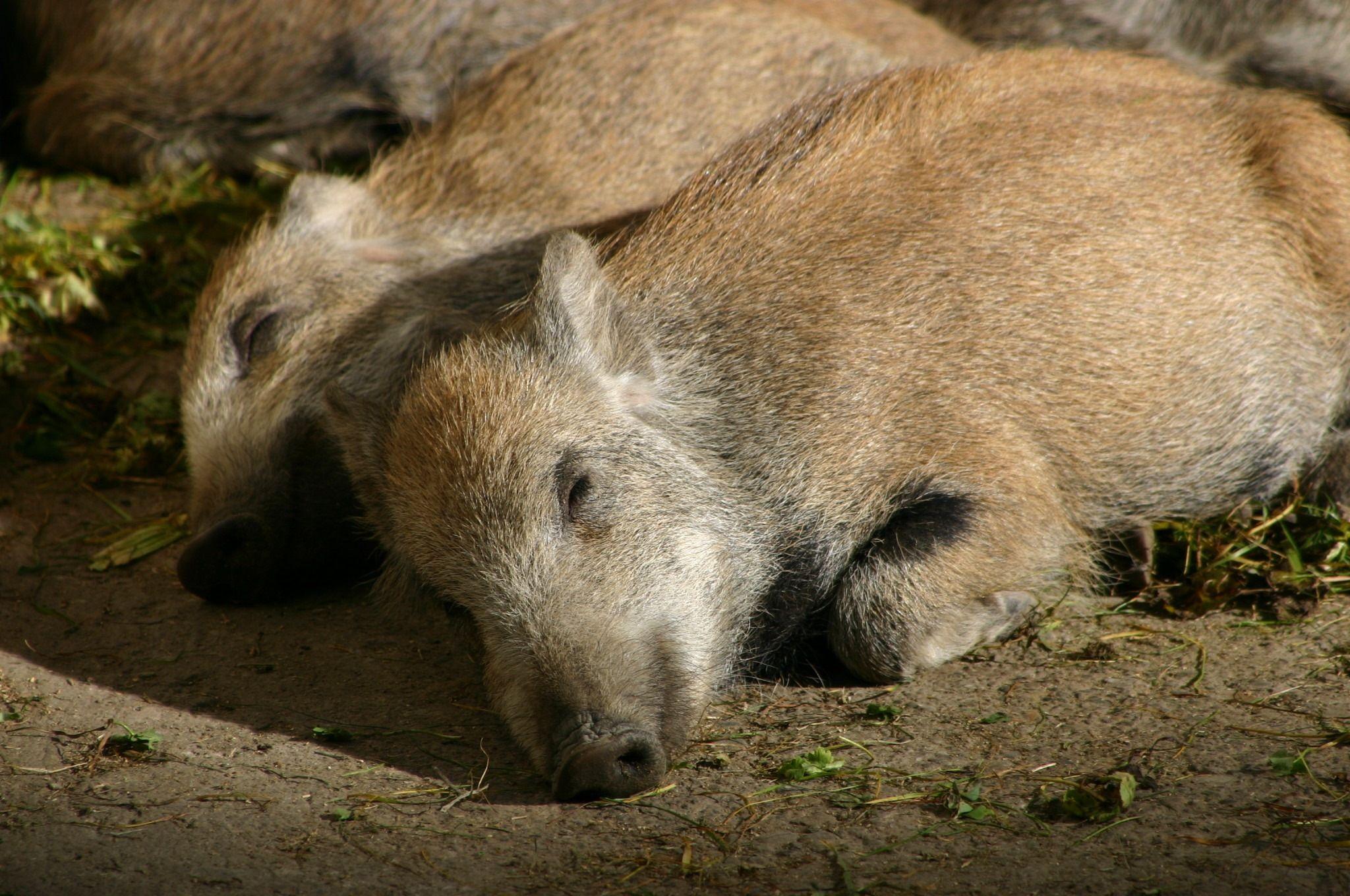 Sleeping... by maha