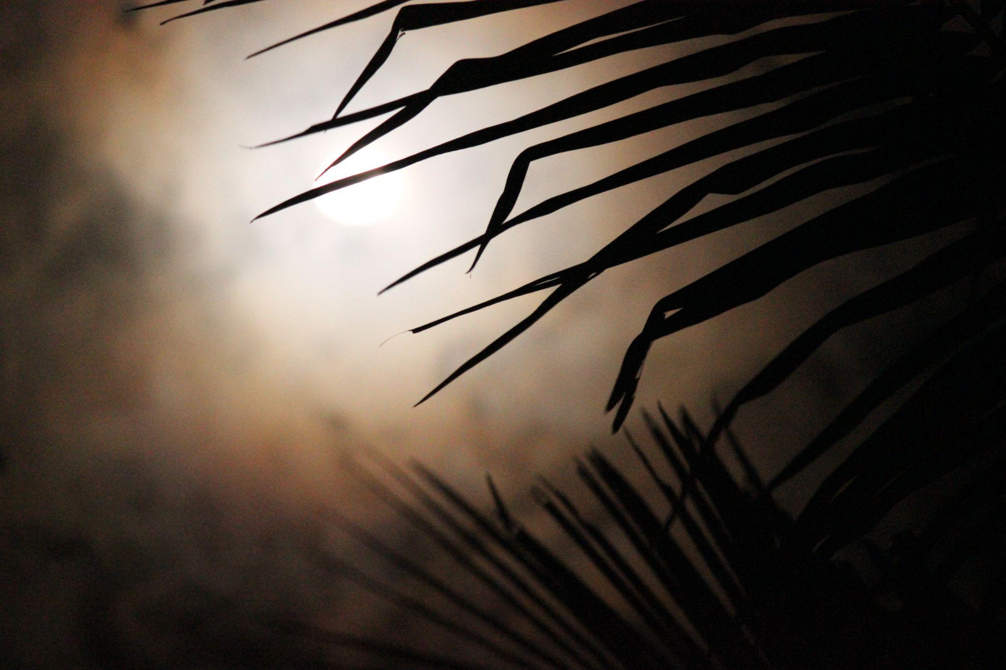 Peek a boo by Dineshnath Baluchamy