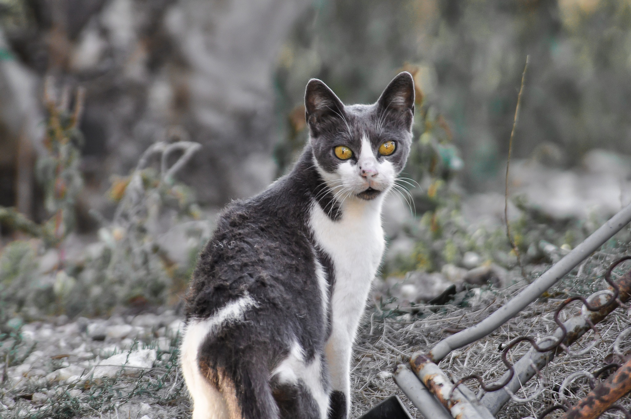 Another village cat by MacMcNamee
