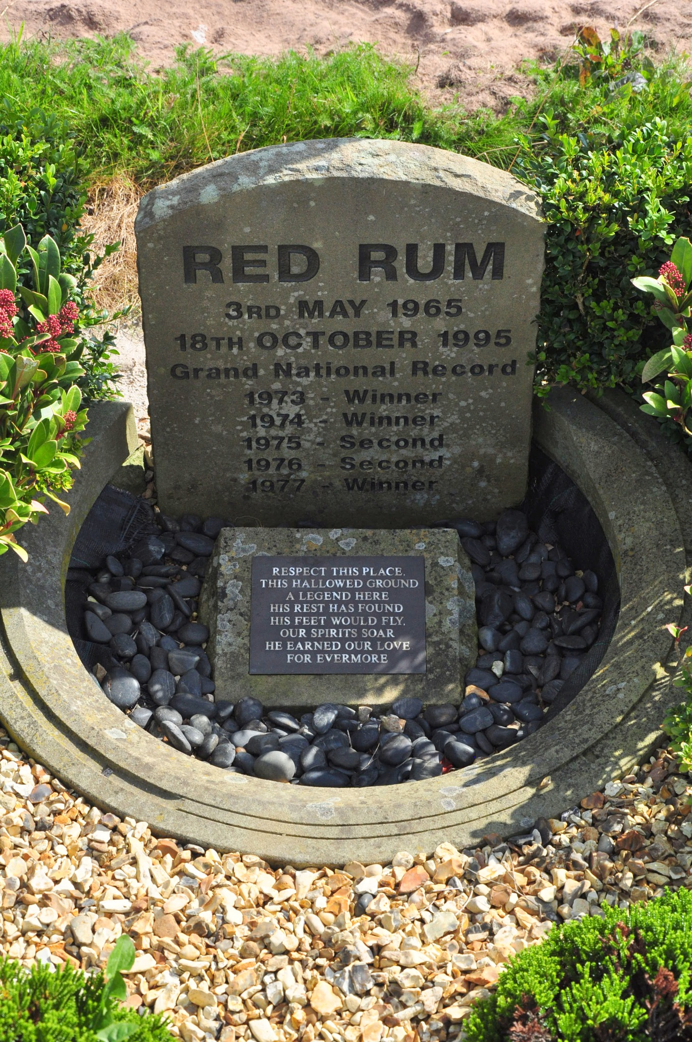 RED RUM world famous race horse  by MacMcNamee