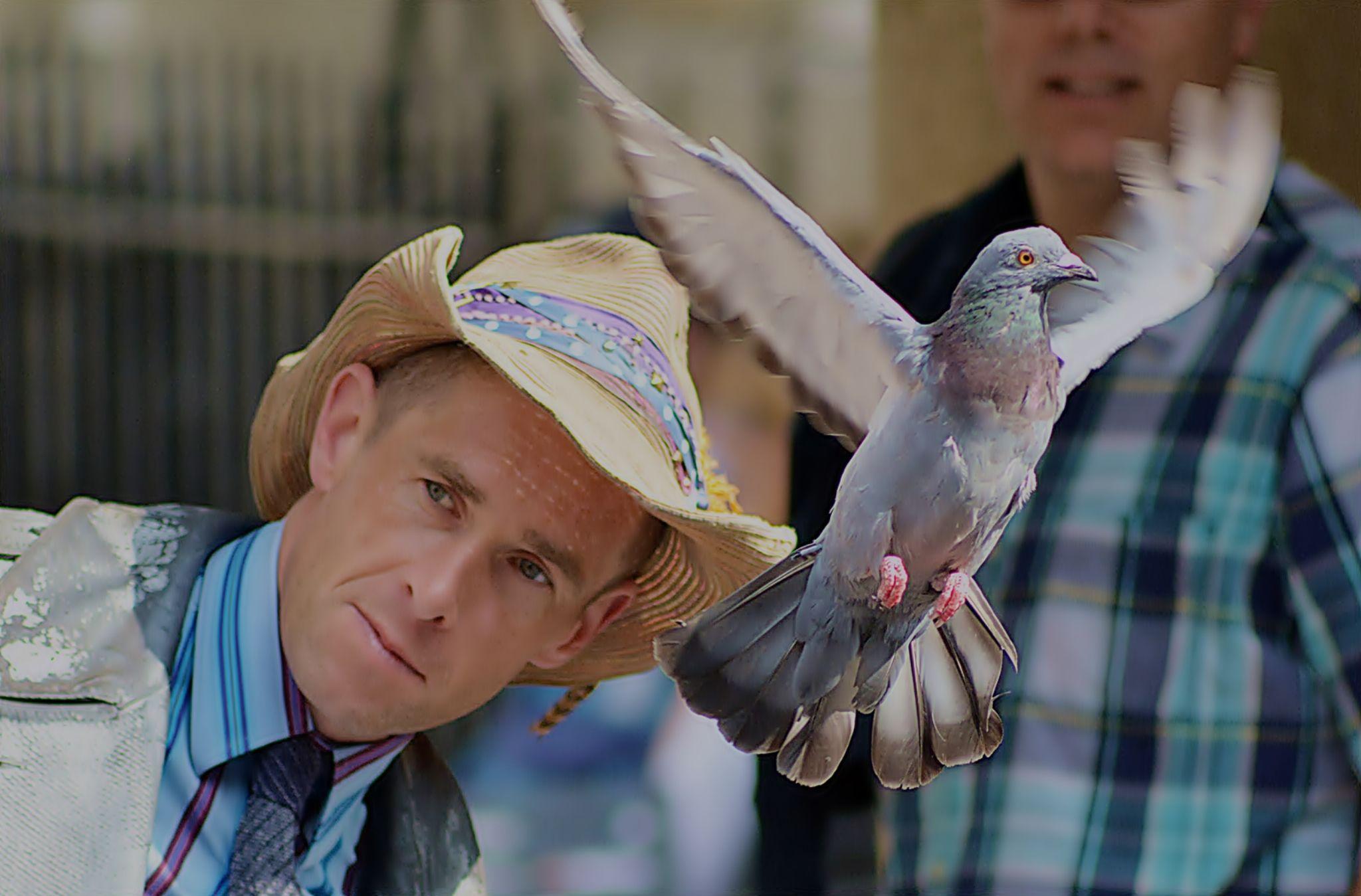 pigeon by Kamil Gaweł