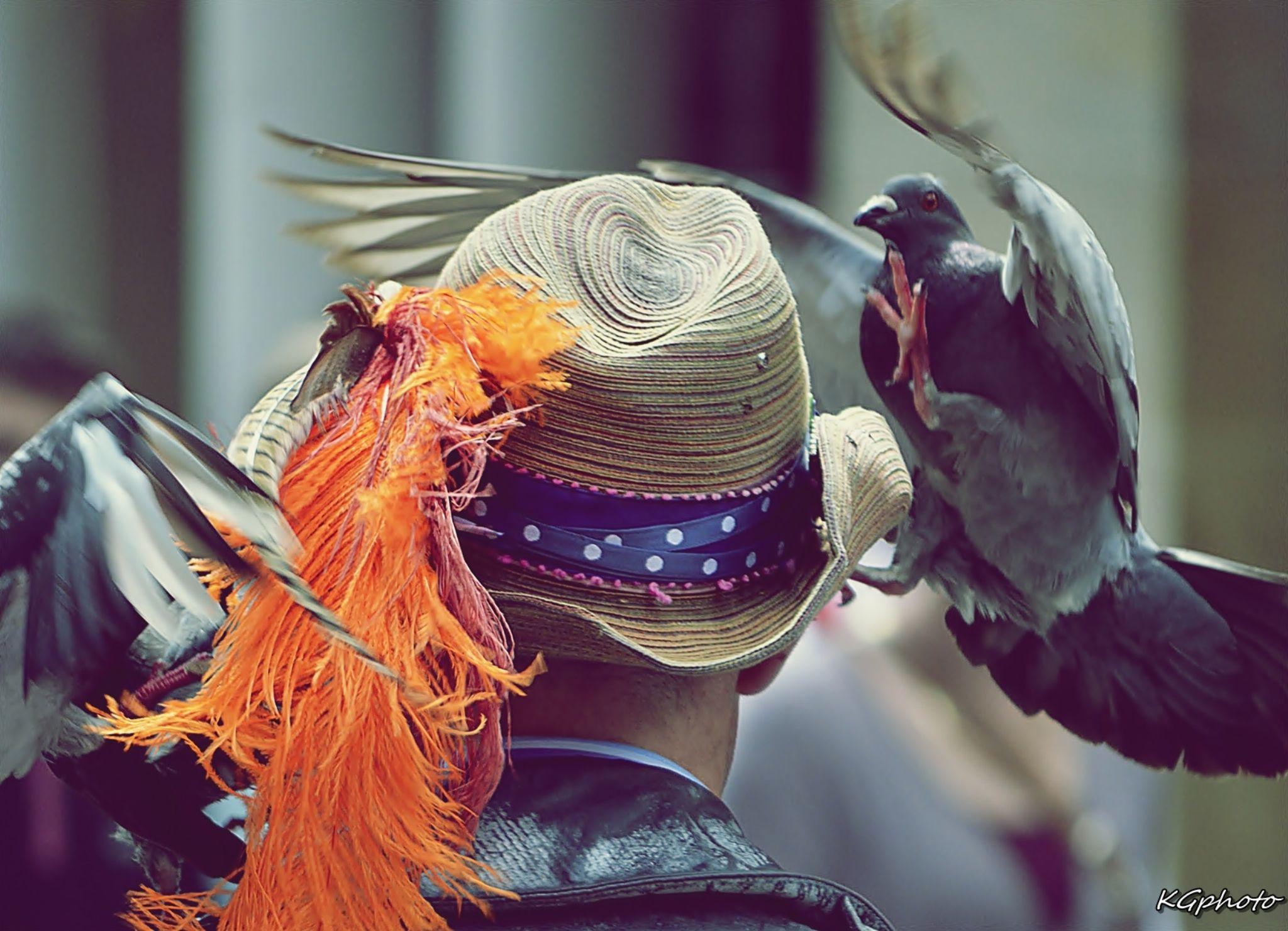 pigeon and hats by Kamil Gaweł