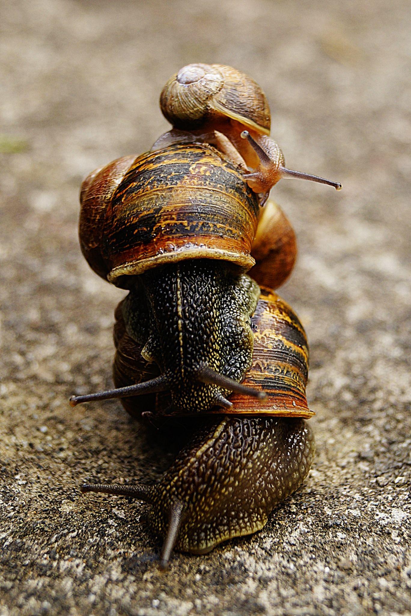 snails by Kamil Gaweł