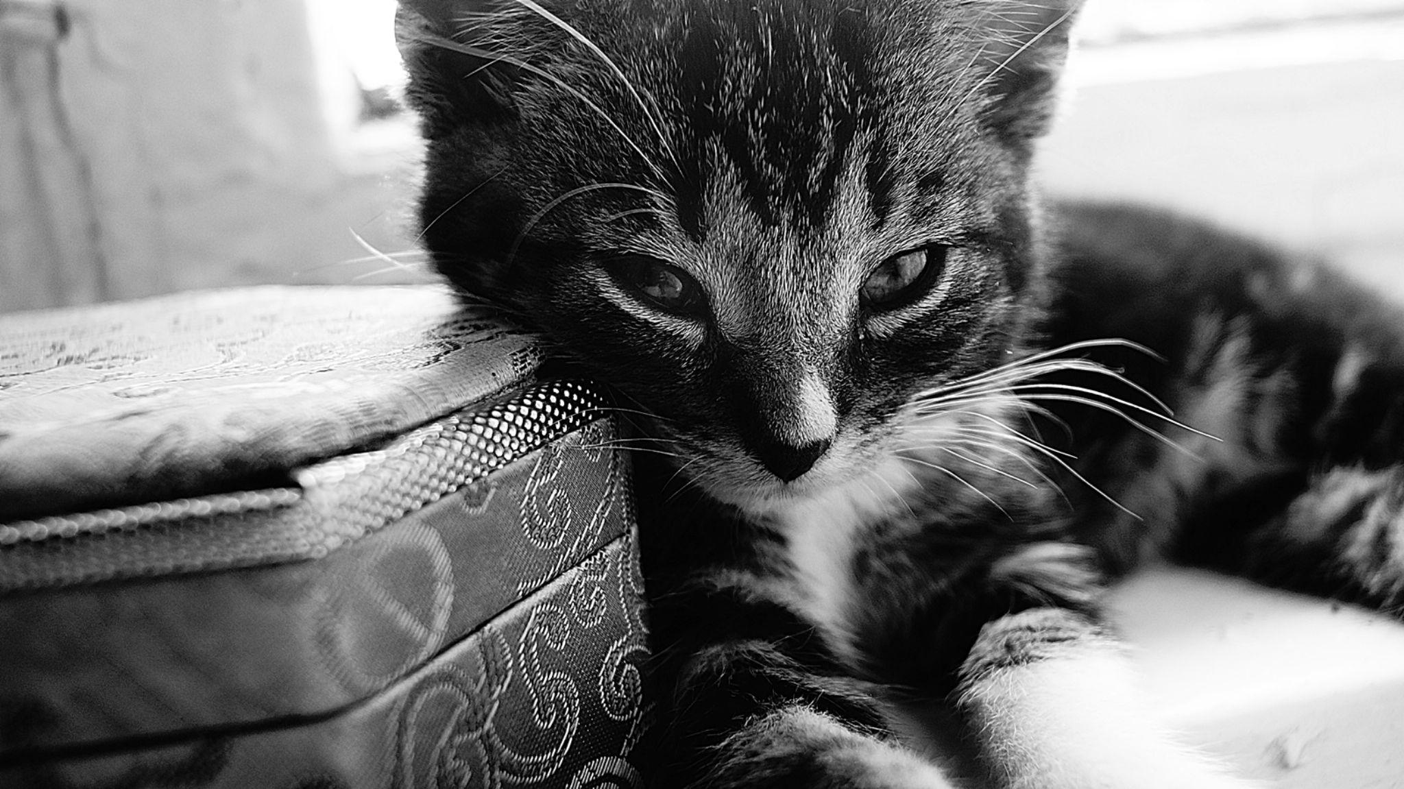 cat by Kamil Gaweł