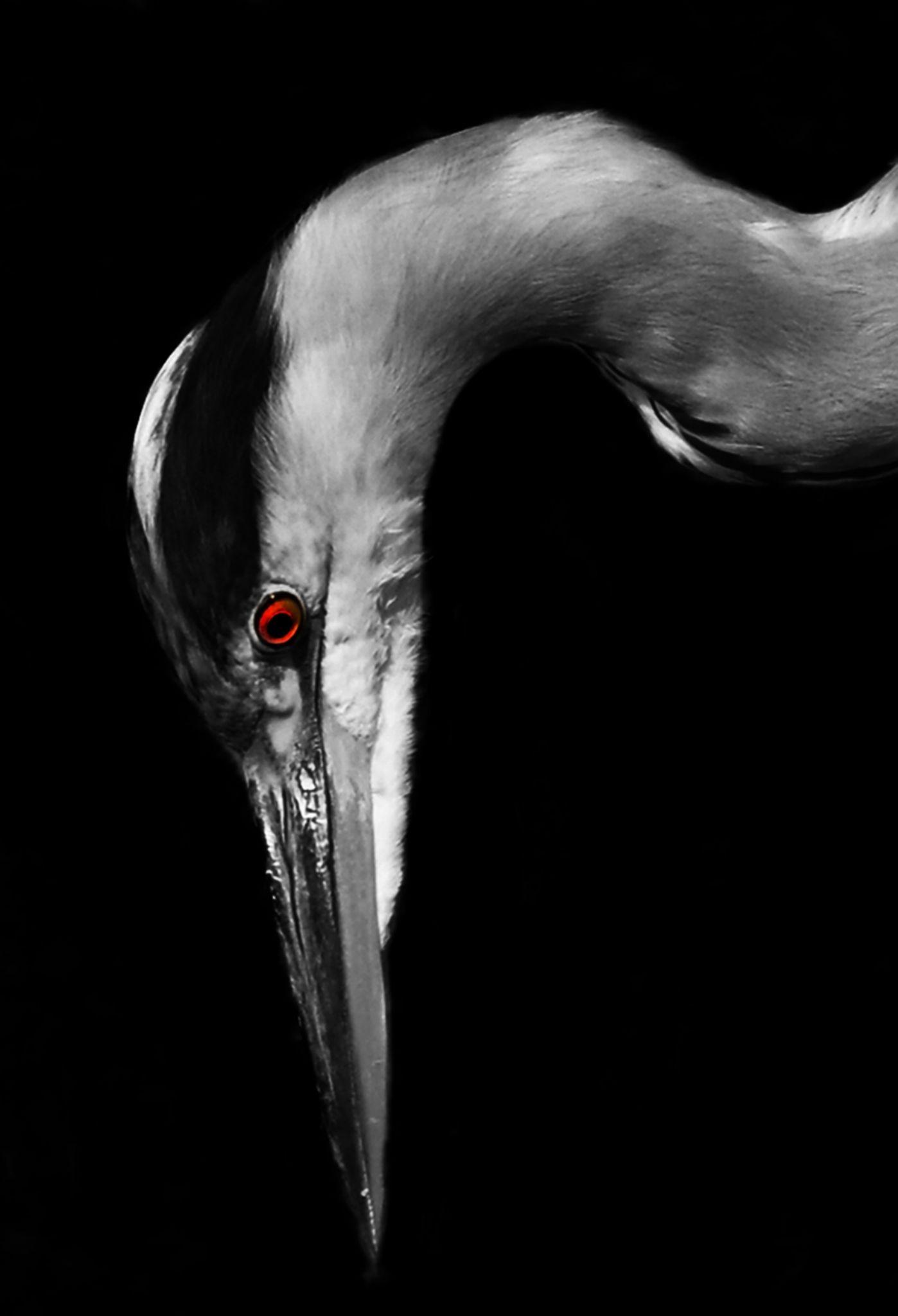 heron by Kamil Gaweł