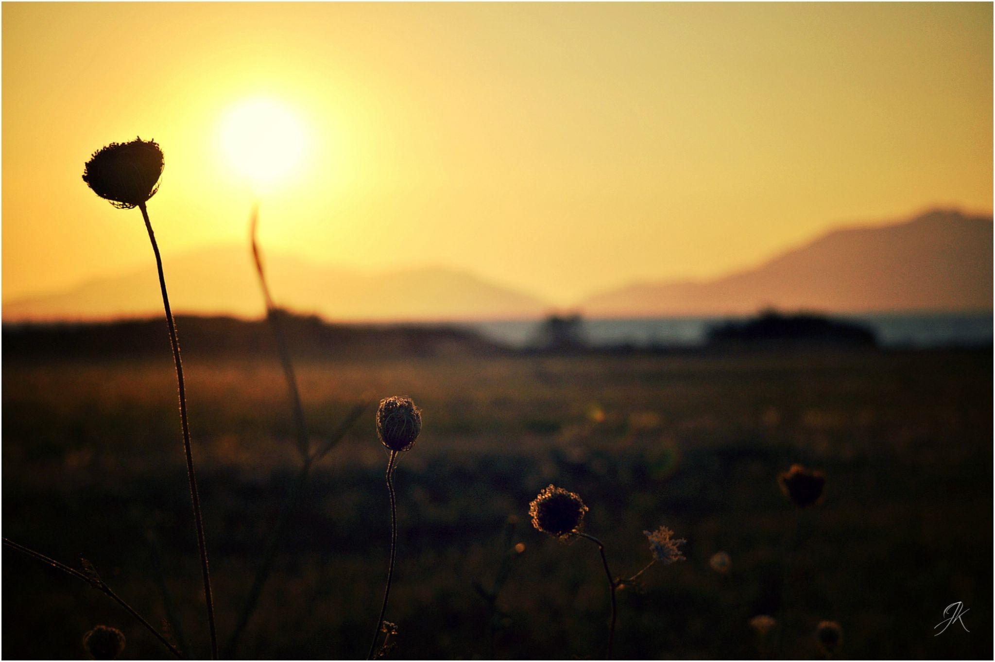 Sunshine by JK Photography