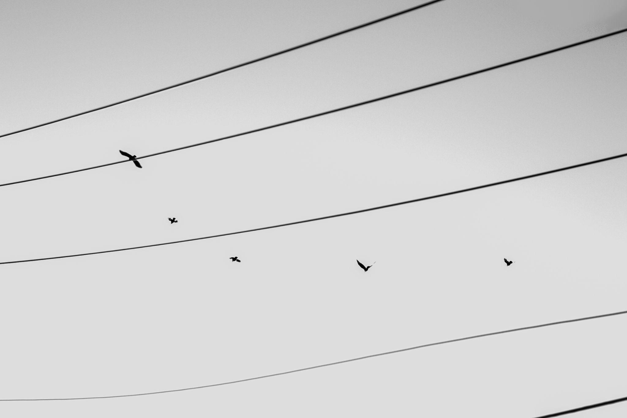Birds by jialian.lin