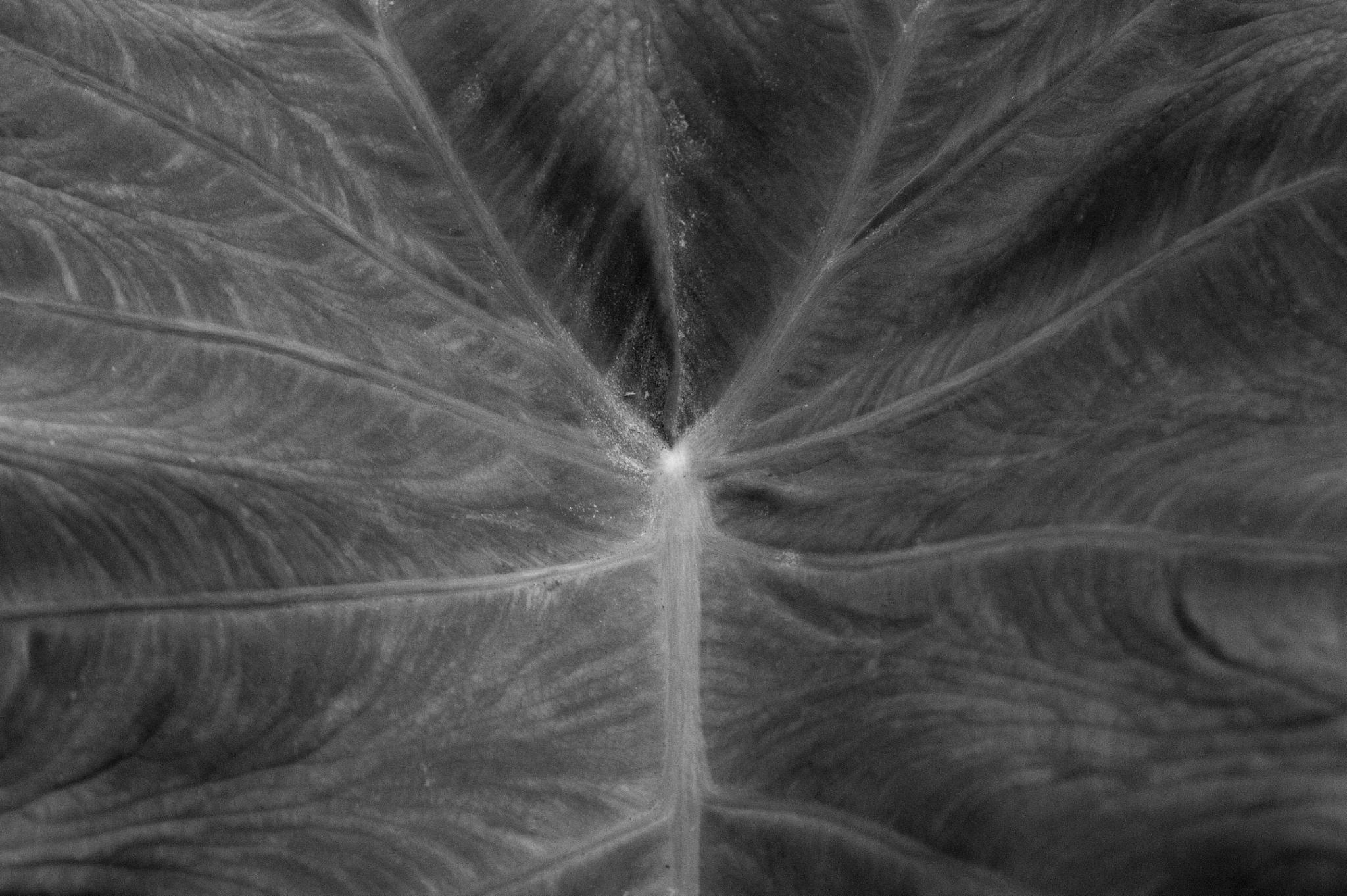 Leaf by jialian.lin
