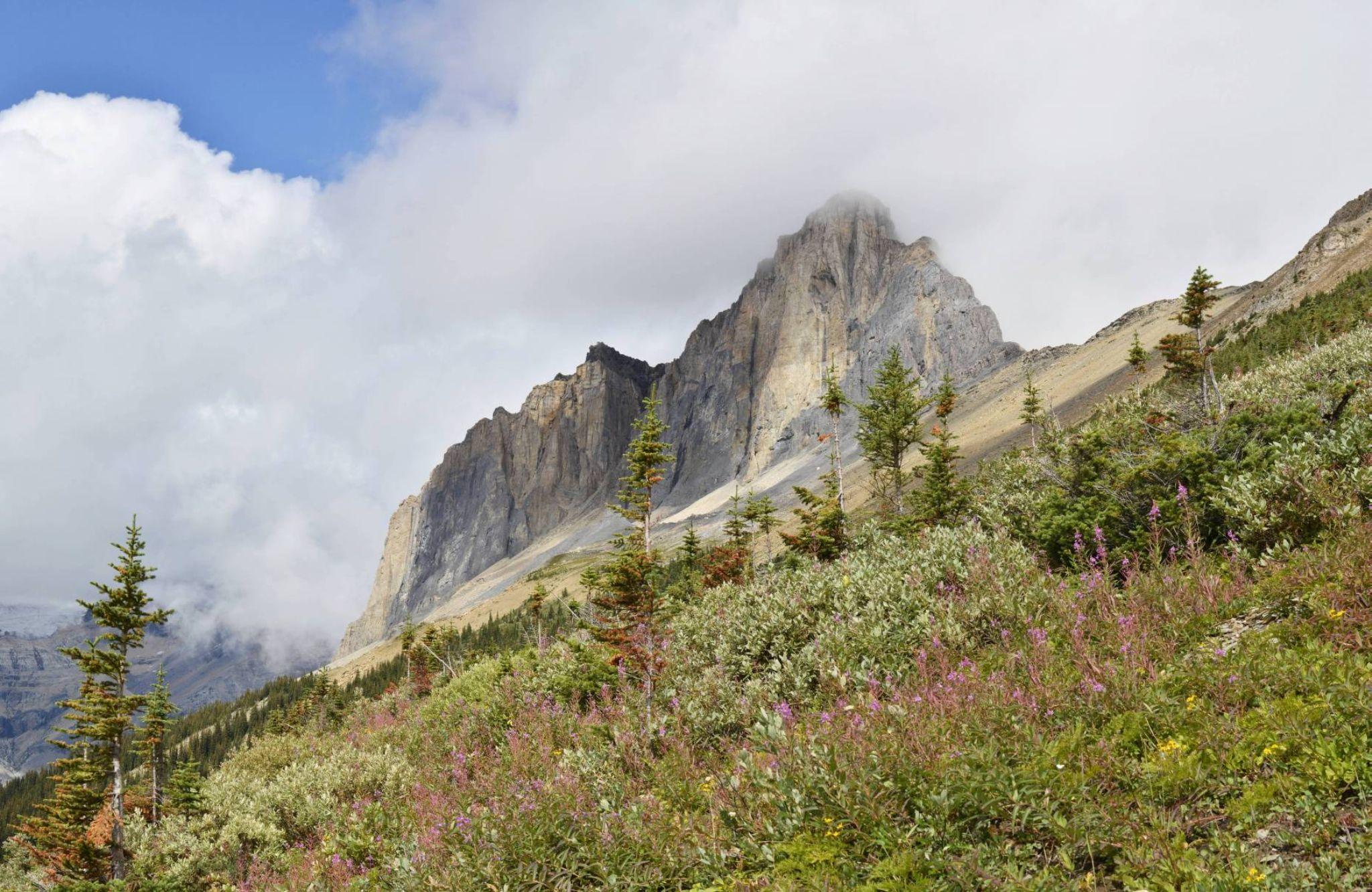 Wapta Mountain by sandymacintosh