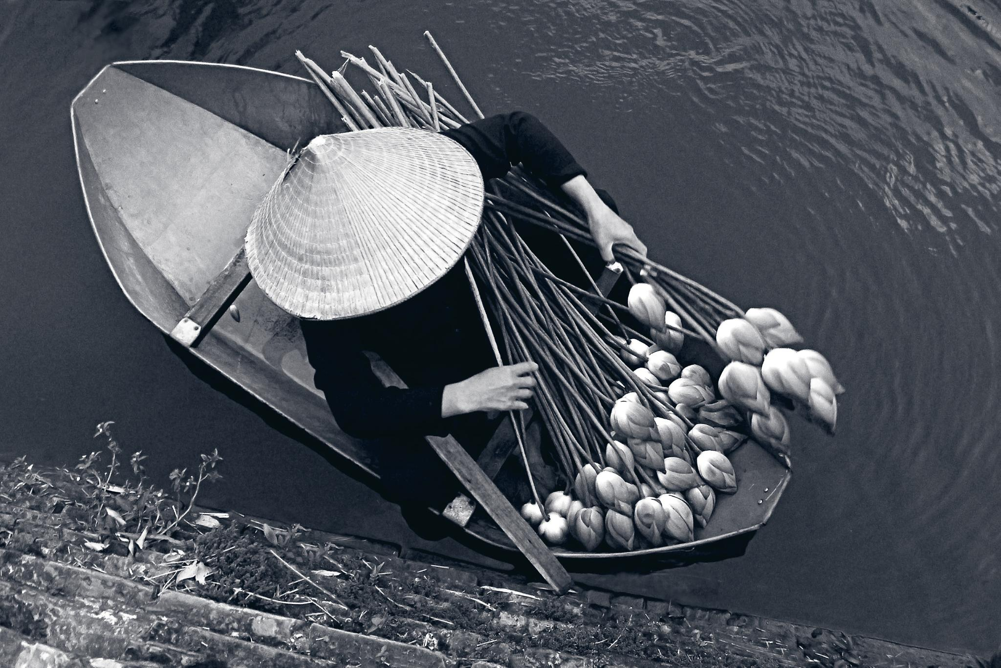 lotus boat by Do Thanh - NgoNgo