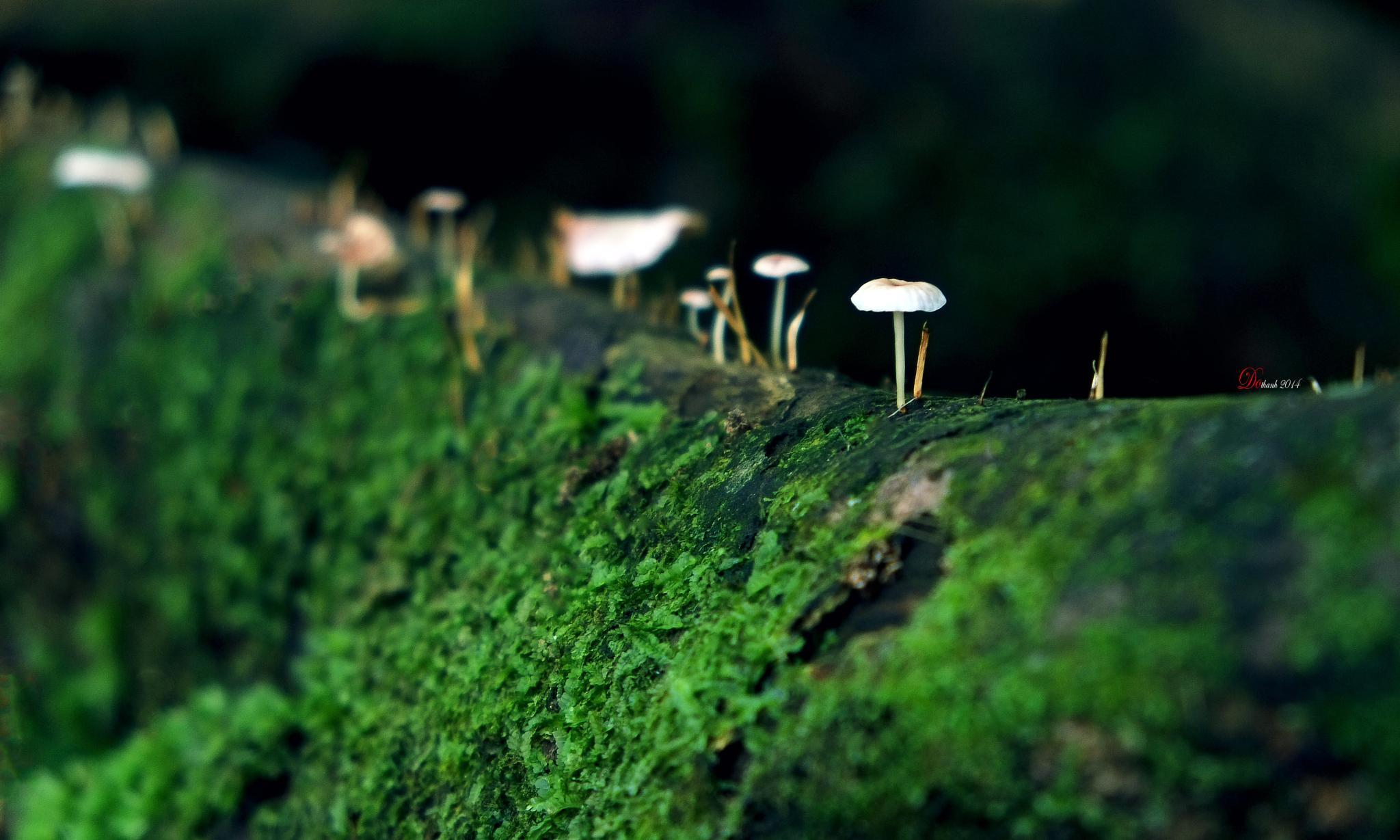 beautiful mushrooms by Do Thanh - NgoNgo