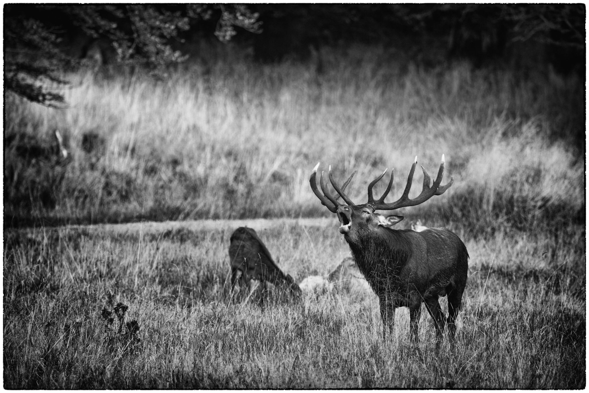 Red Deer III by Stilfoto
