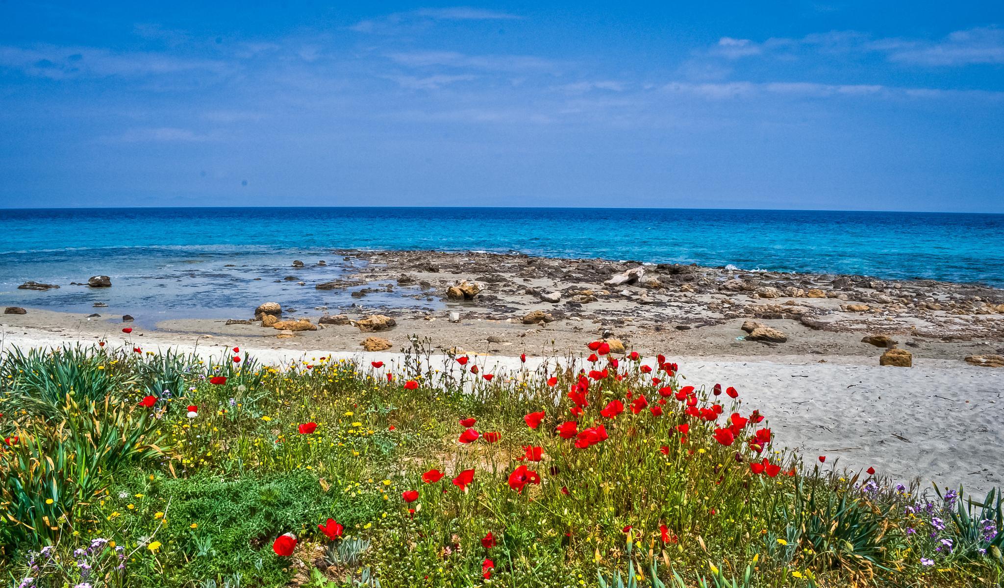 On the beach by Eduard Andrica