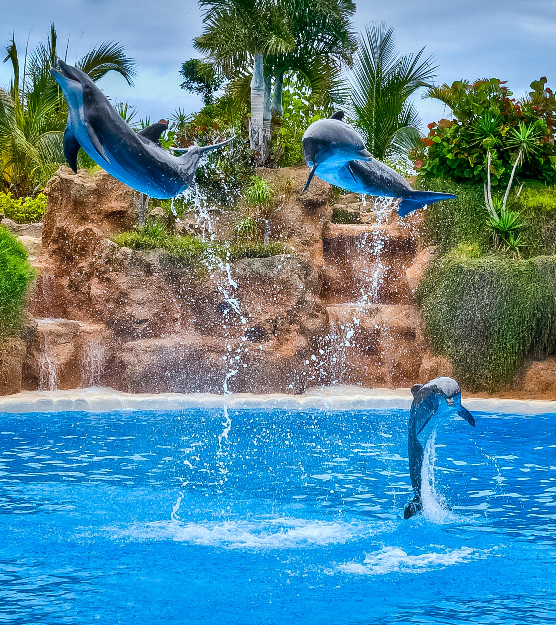 Flying dolphins by Eduard Andrica