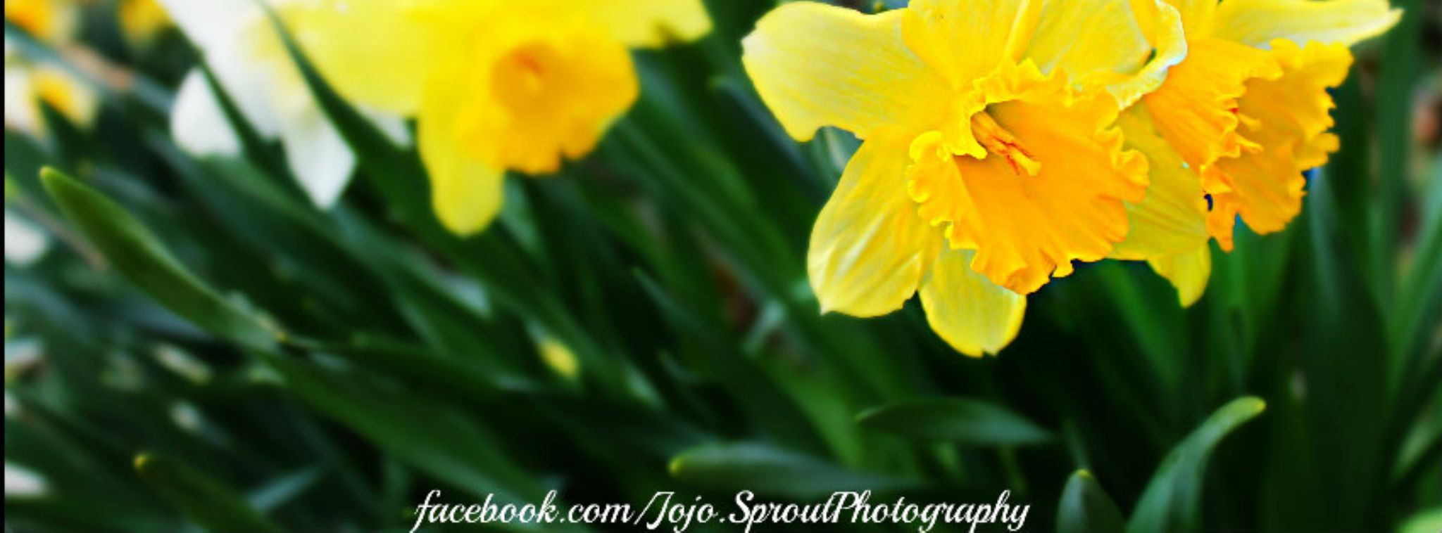 Bright yellow by JoJoSprout Photography