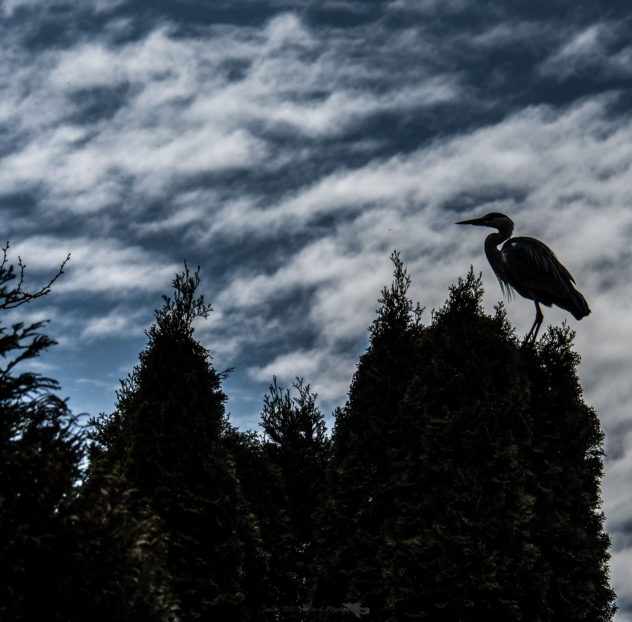 heron on the trees by jaden shillingford