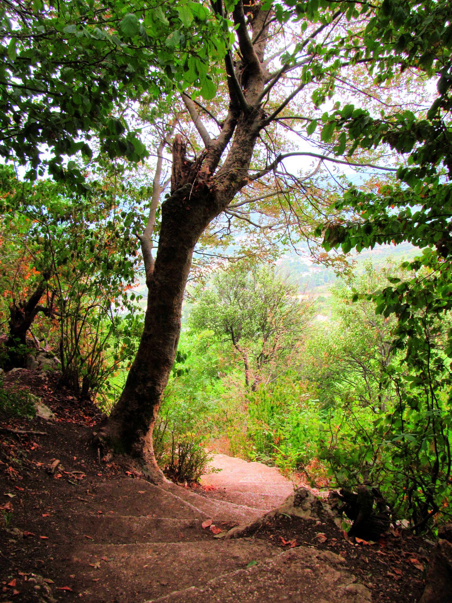 در مسیر مارکوه by riwa48