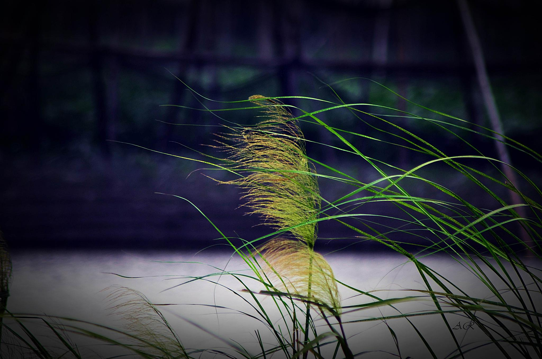 Feel the Breeze  by Ahsanul Rony