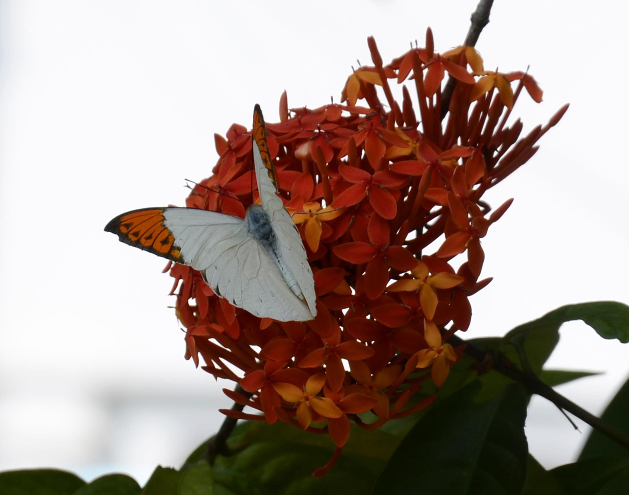 Butterfly by Shafiqul Islam Shiplu Photography