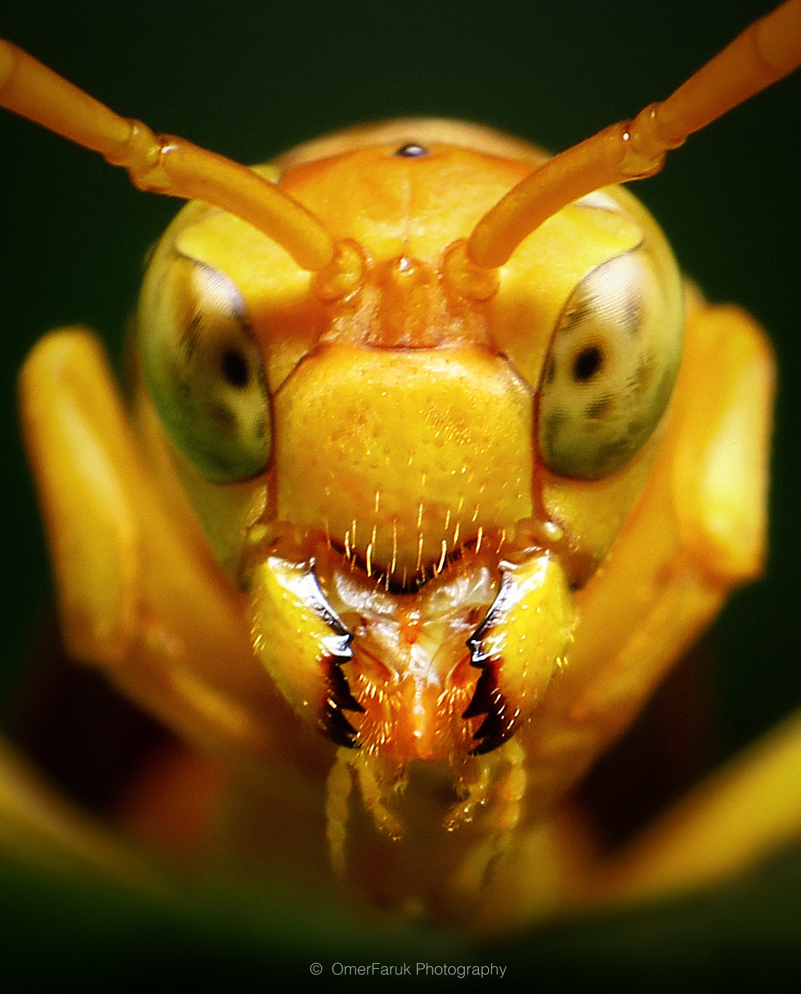 Oriental Paper Wasp by omerfaruk4662