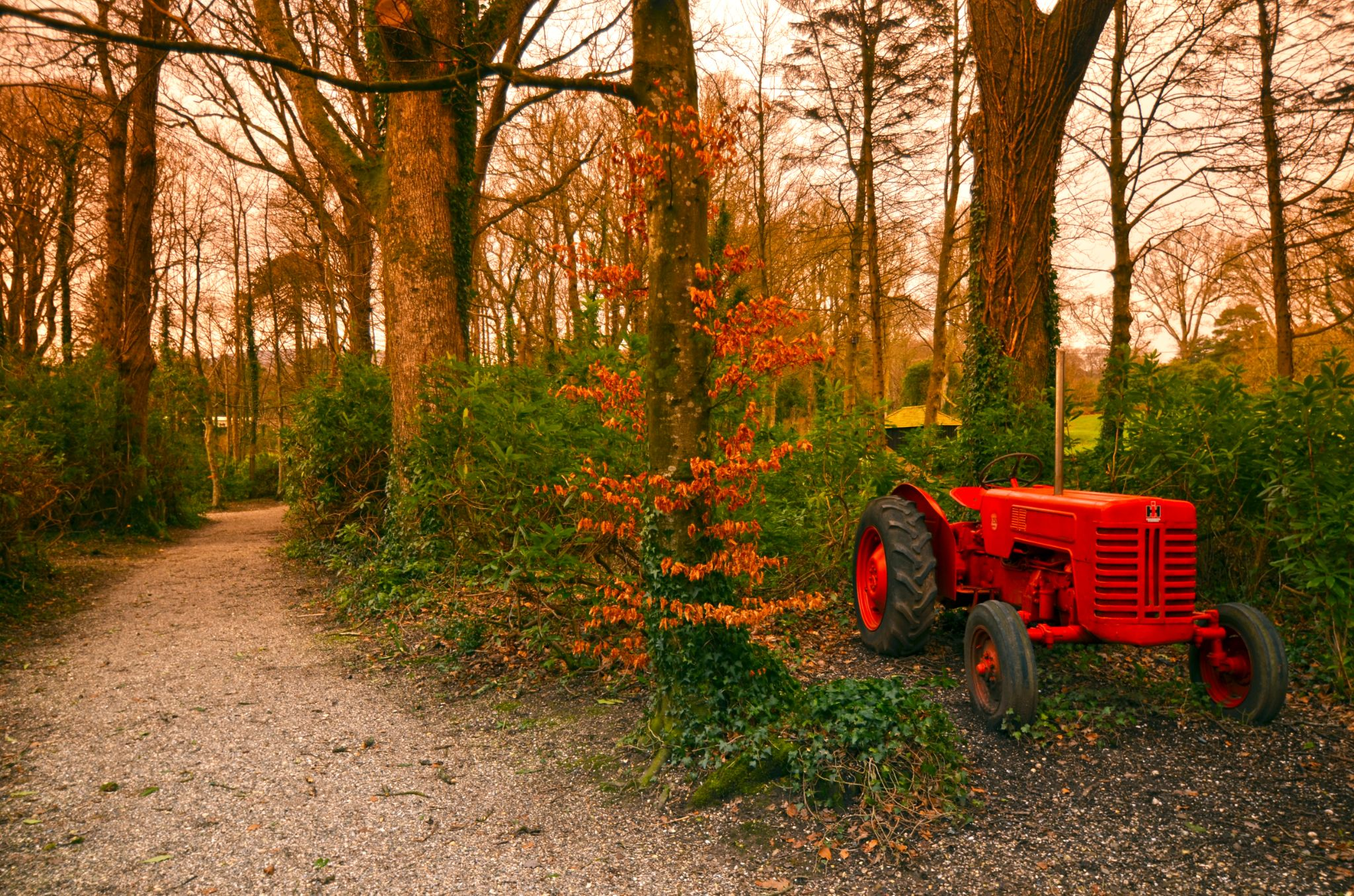 Red Tractor by tom.douthwaite