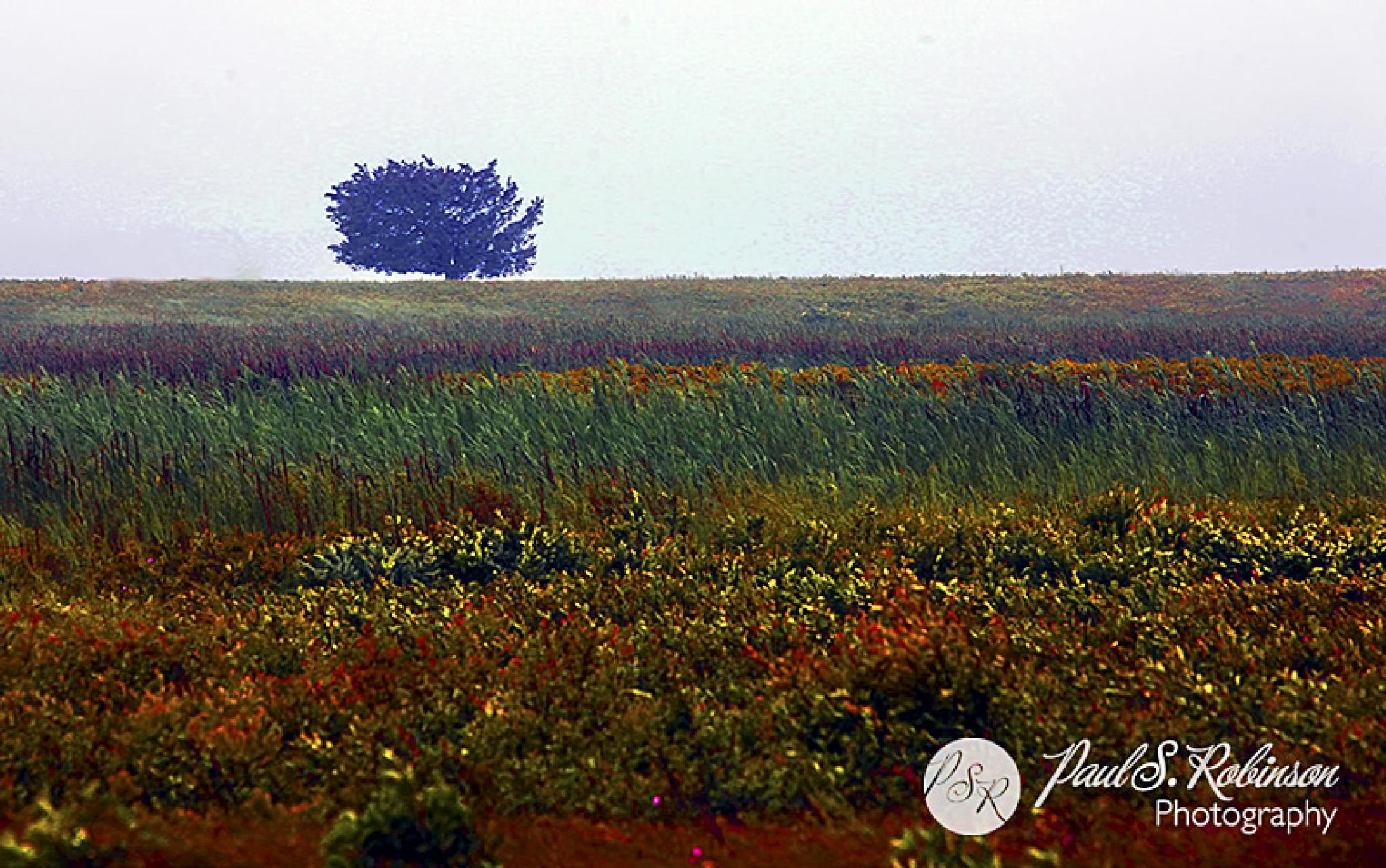 Tree On A Cloudy Day by psrstudio