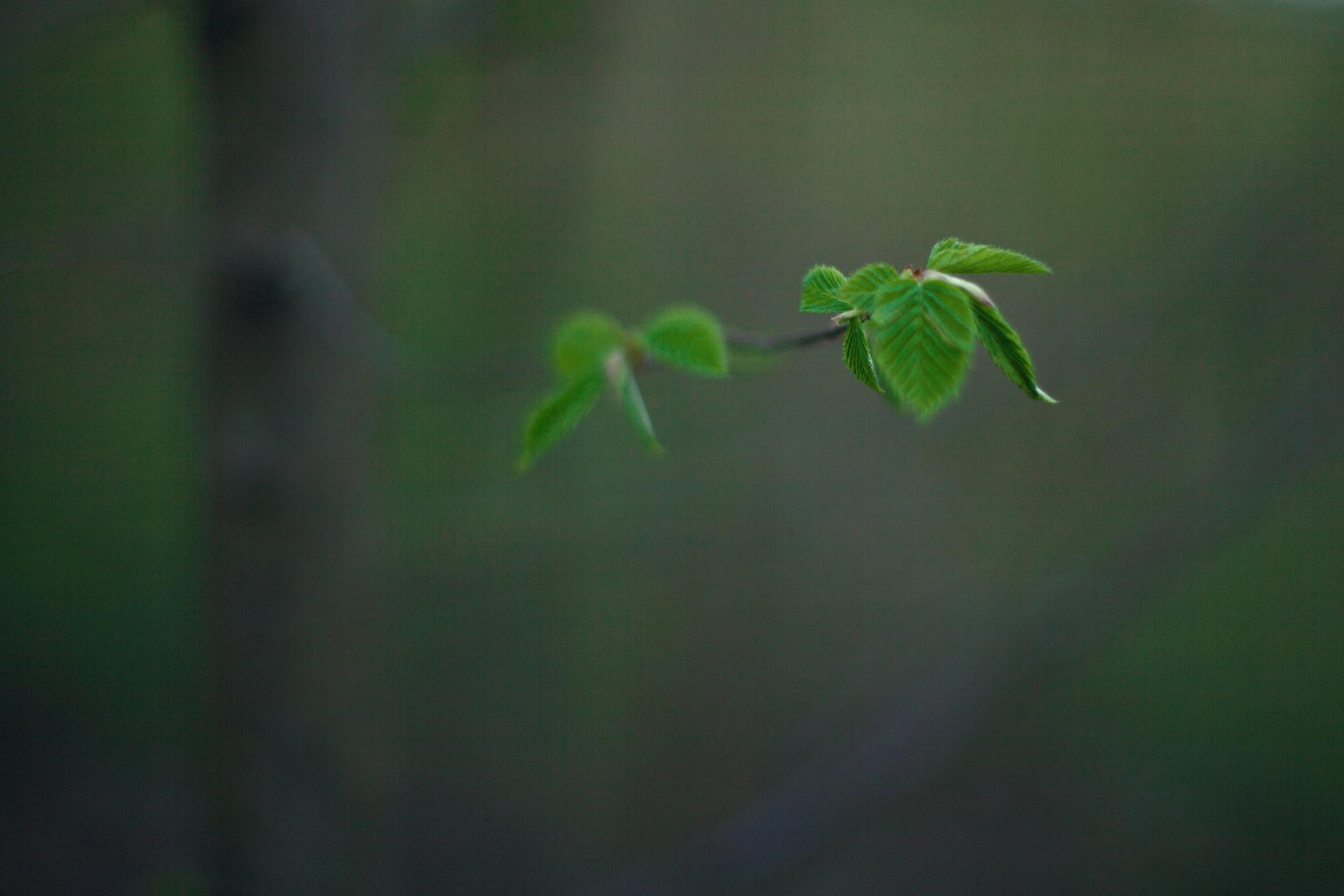 Tiny ones by Matej Kmet