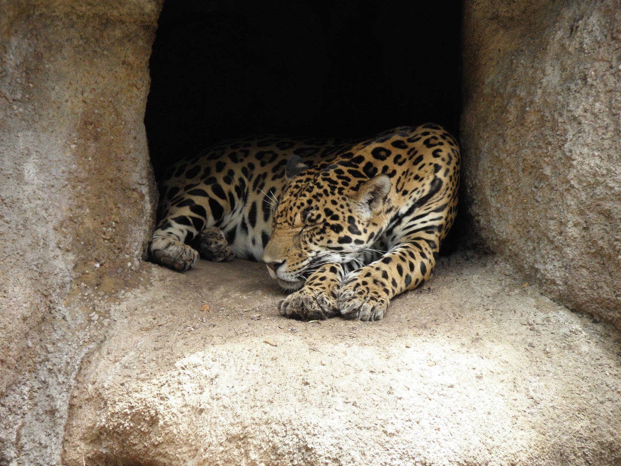 Sleeping Beauty by Praveen Teegala