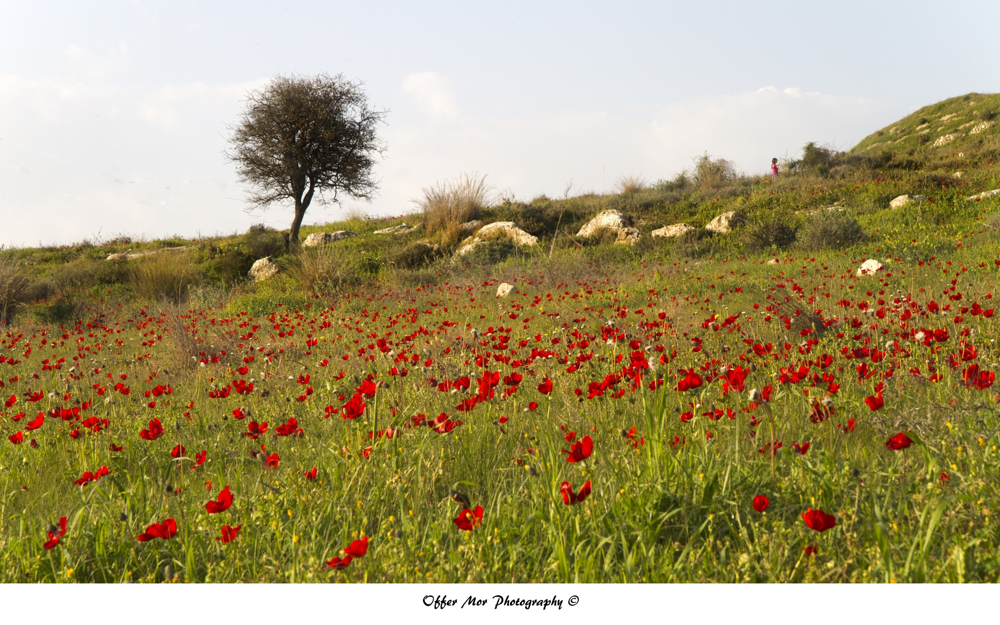 The Girl in the Poppy field by offermor