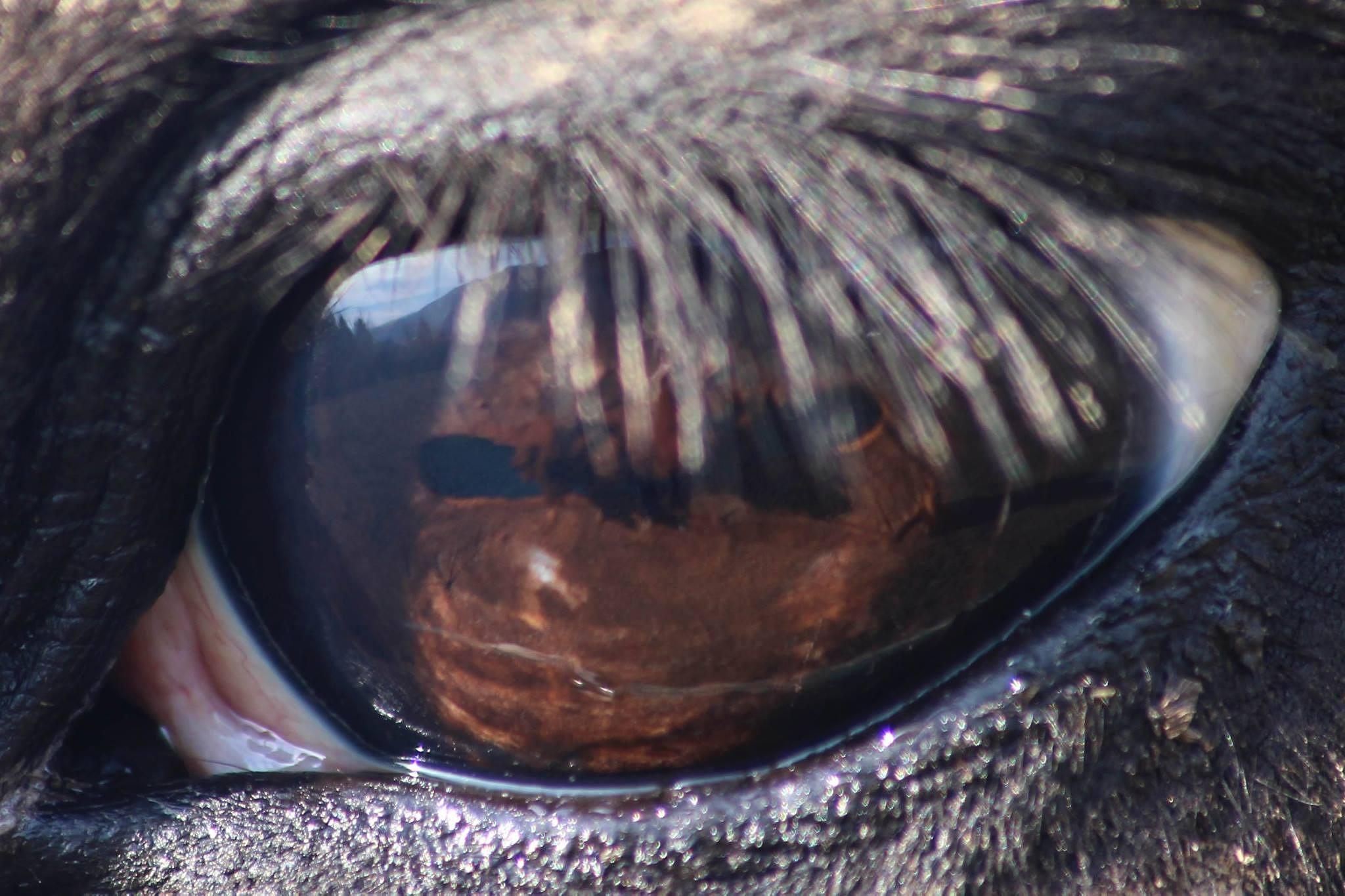 Through the Horse's Eye by Joey Lezotte