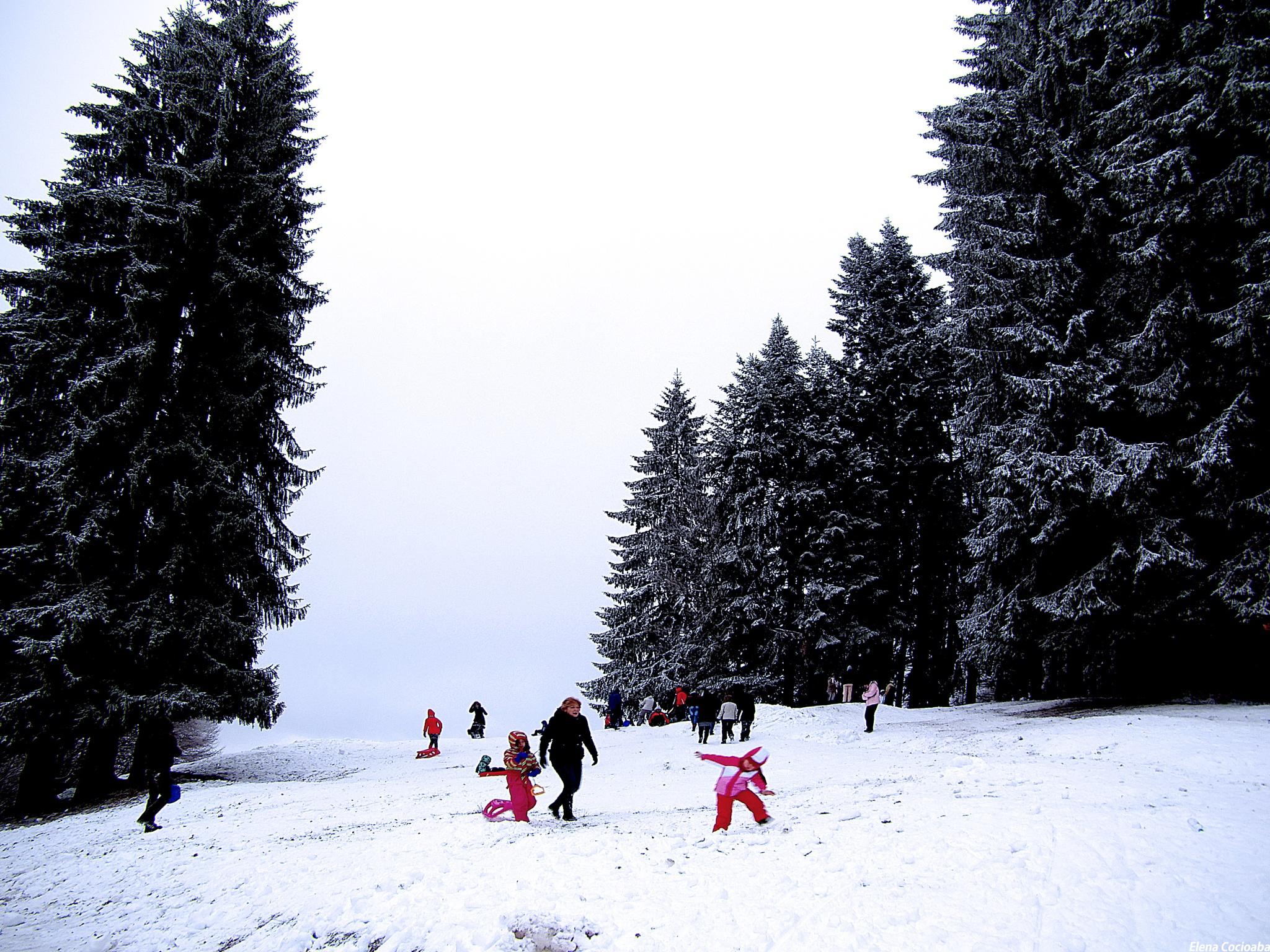On sleighing by elena.cocioaba