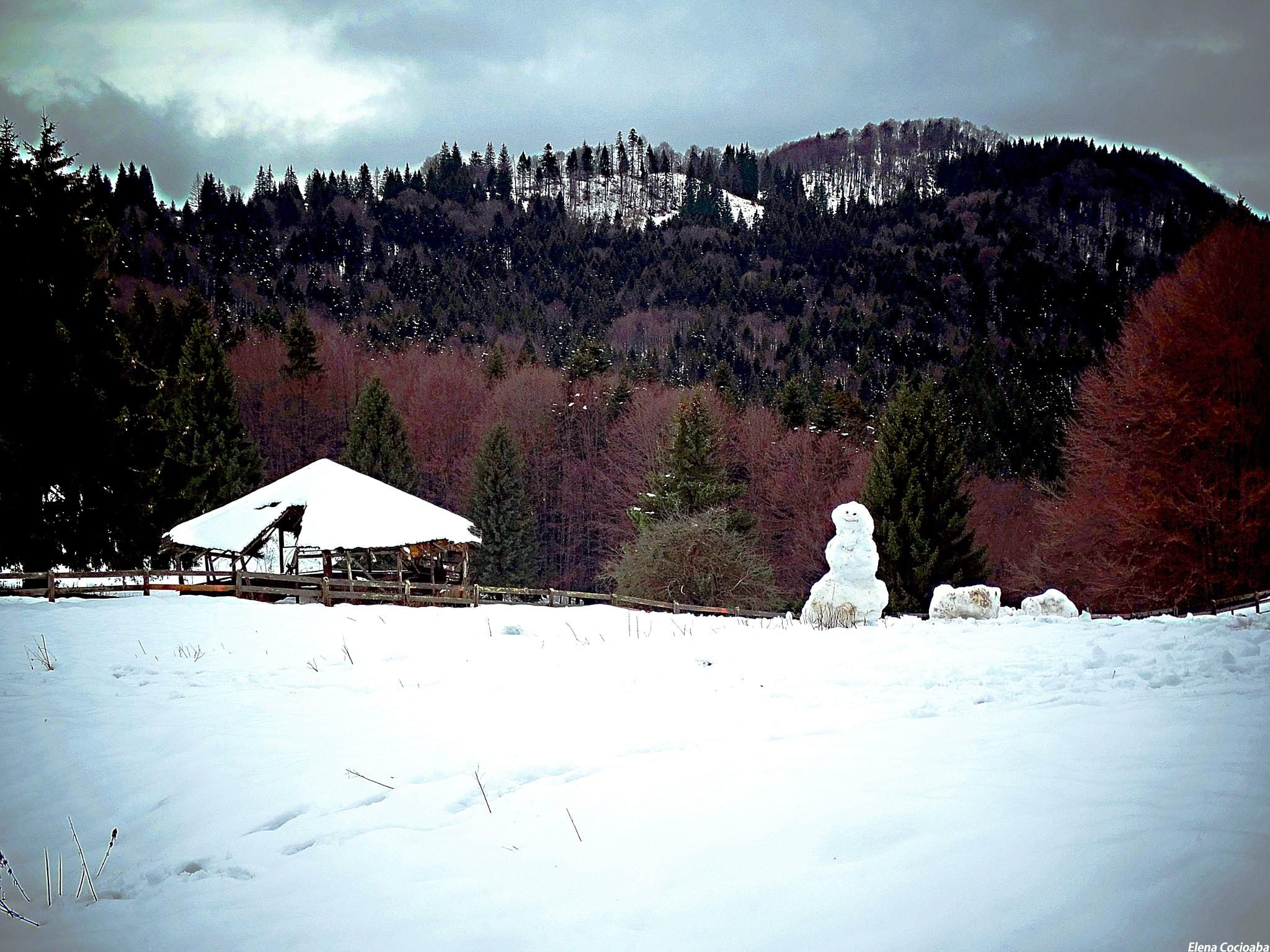 Winter by elena.cocioaba