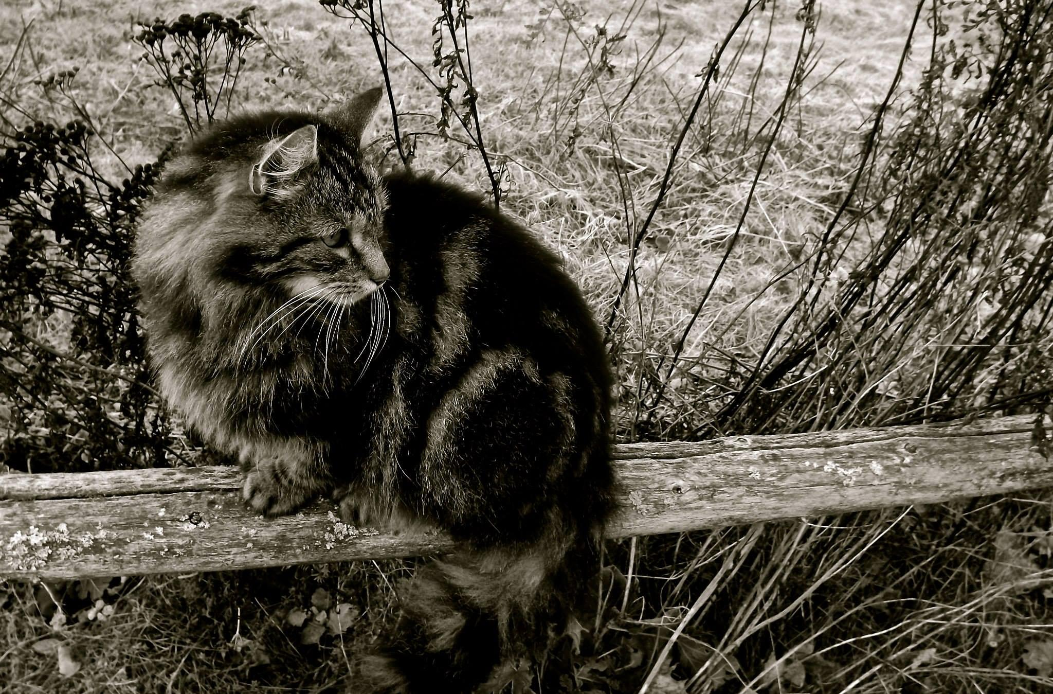 Photo in Black and White #cat #fence #nature