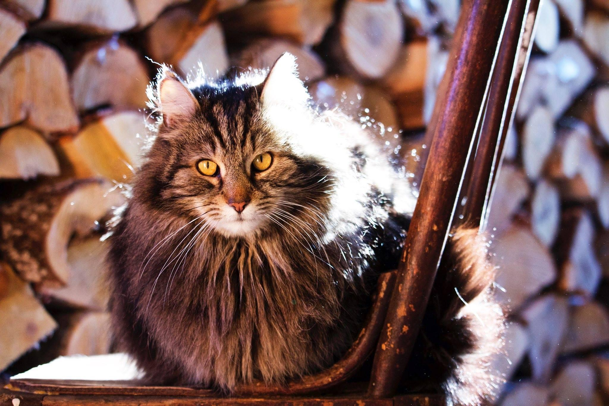 cat in the wood shed  by kim.trevors