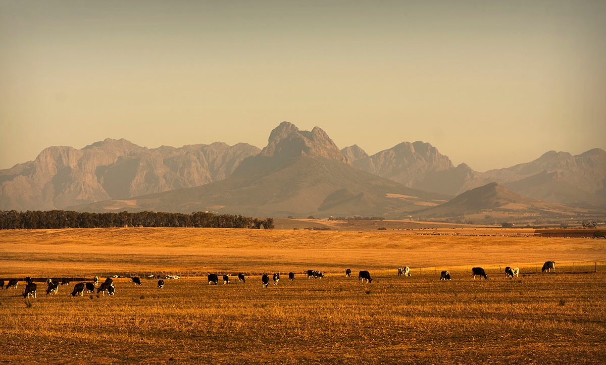 Cattle and Mountains by hassner