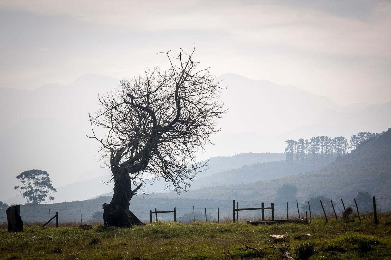 Photo in Landscape #farm #tree #old #winter