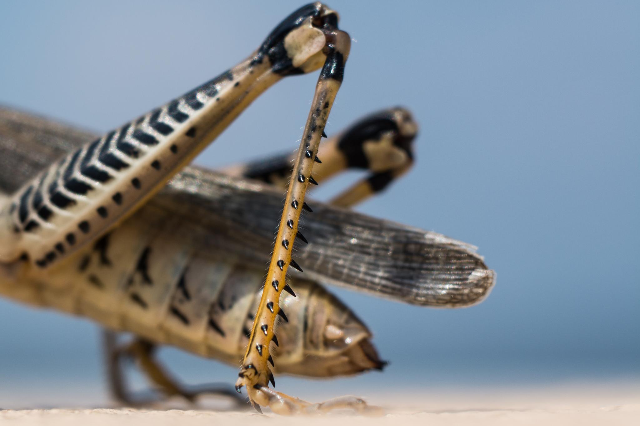Grasshopper by serkanzanagar