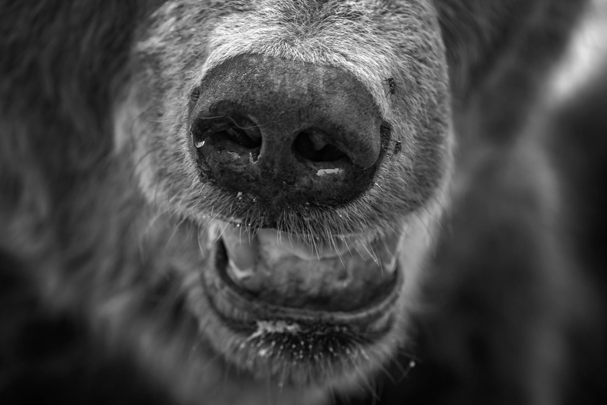 Bear by zdenka.photo