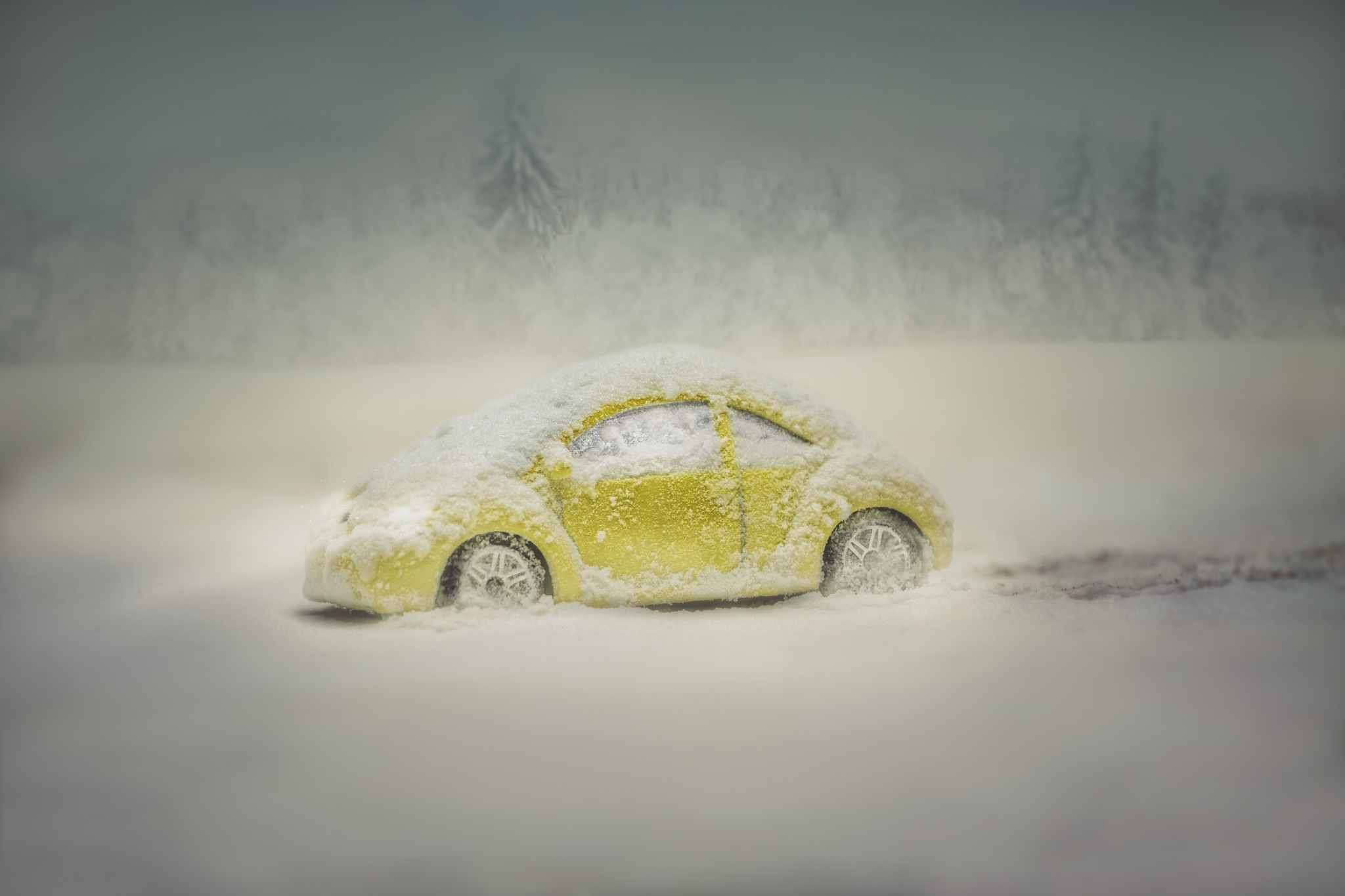 winter beetle (miniature) by zdenka.photo