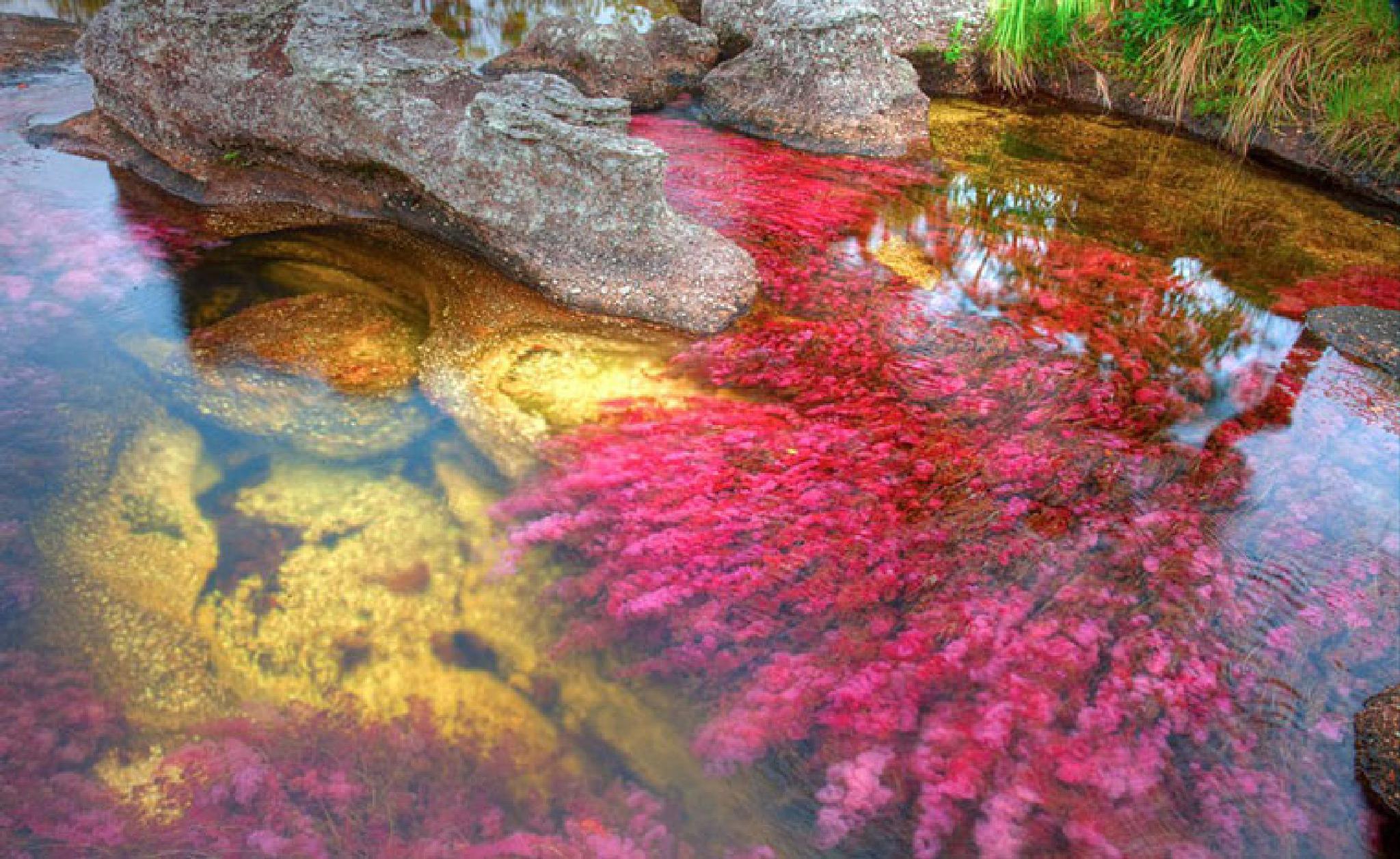 Beautiful Pond by Seyed Mohsen Mirhosseini