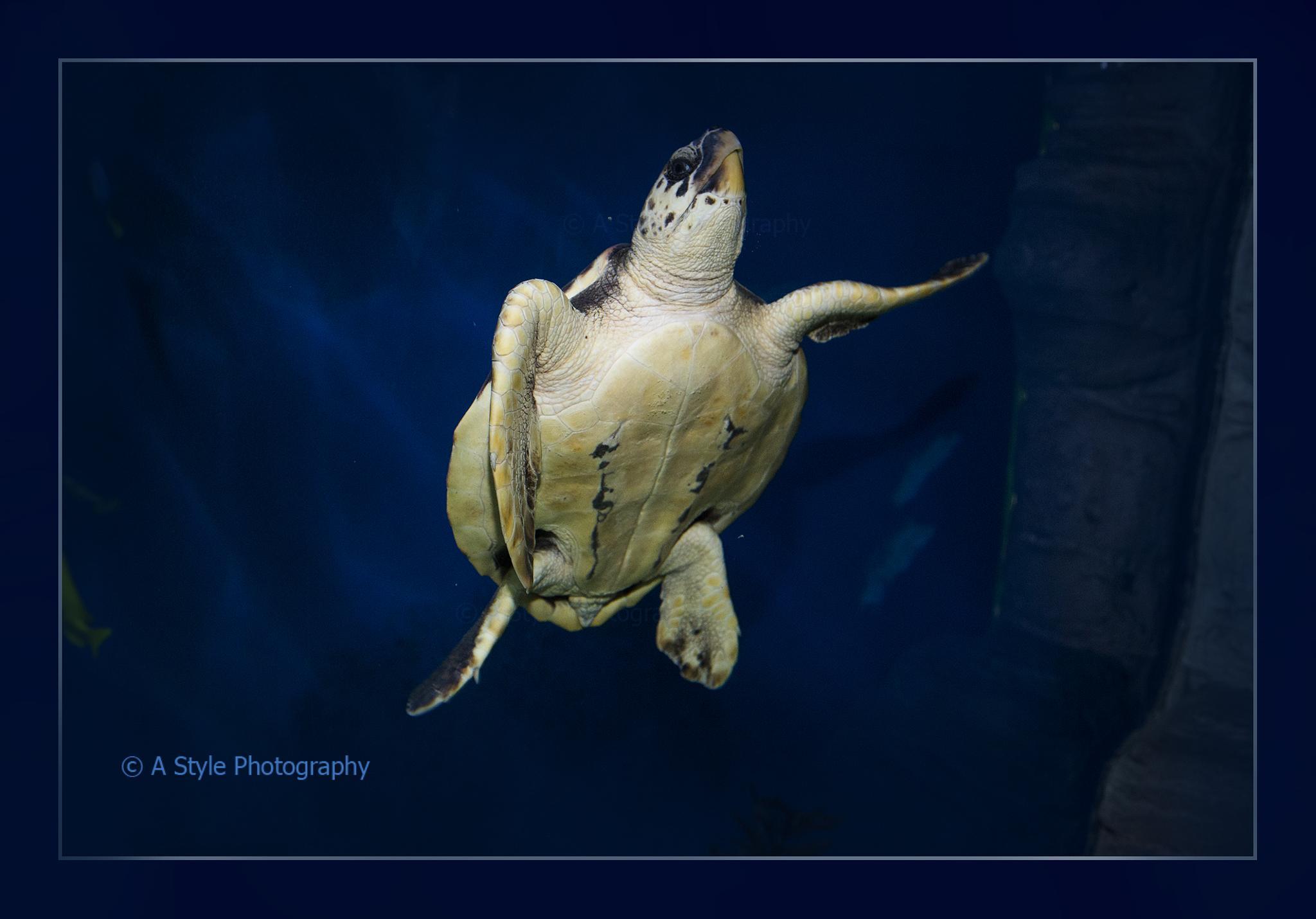 turtle  by AkhtarSharifi