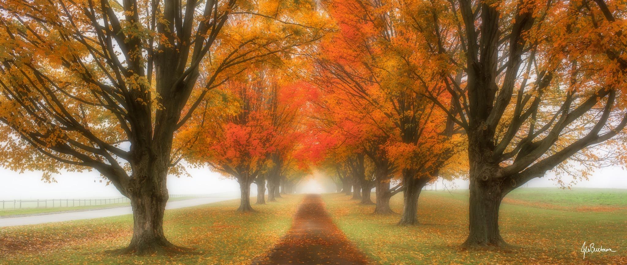 Autumn Road by Jeb Buchman