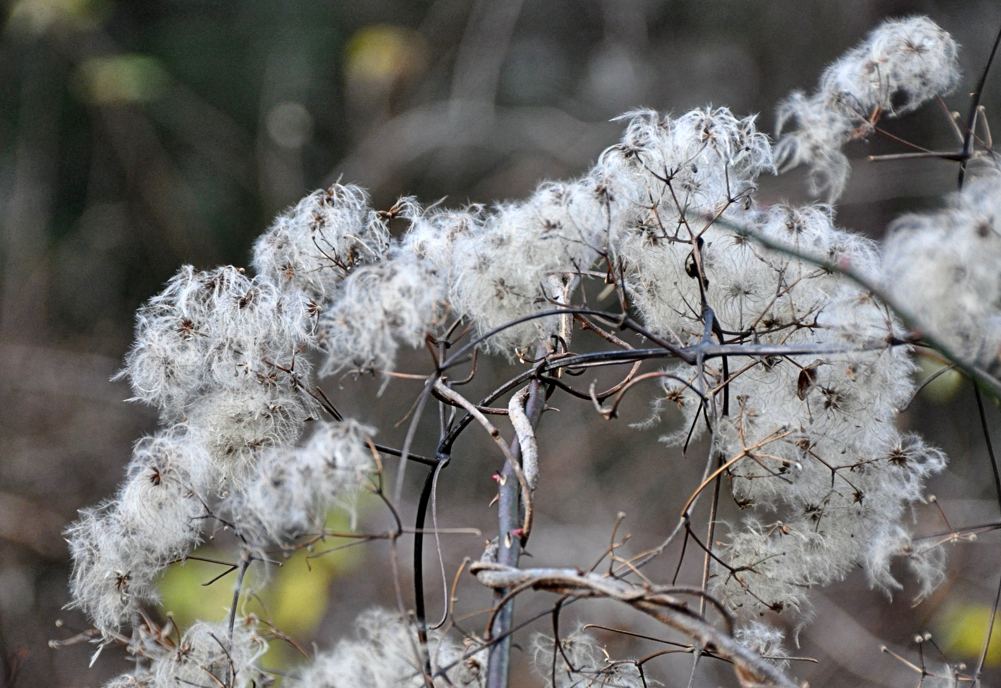Fuzzy November by Joeski
