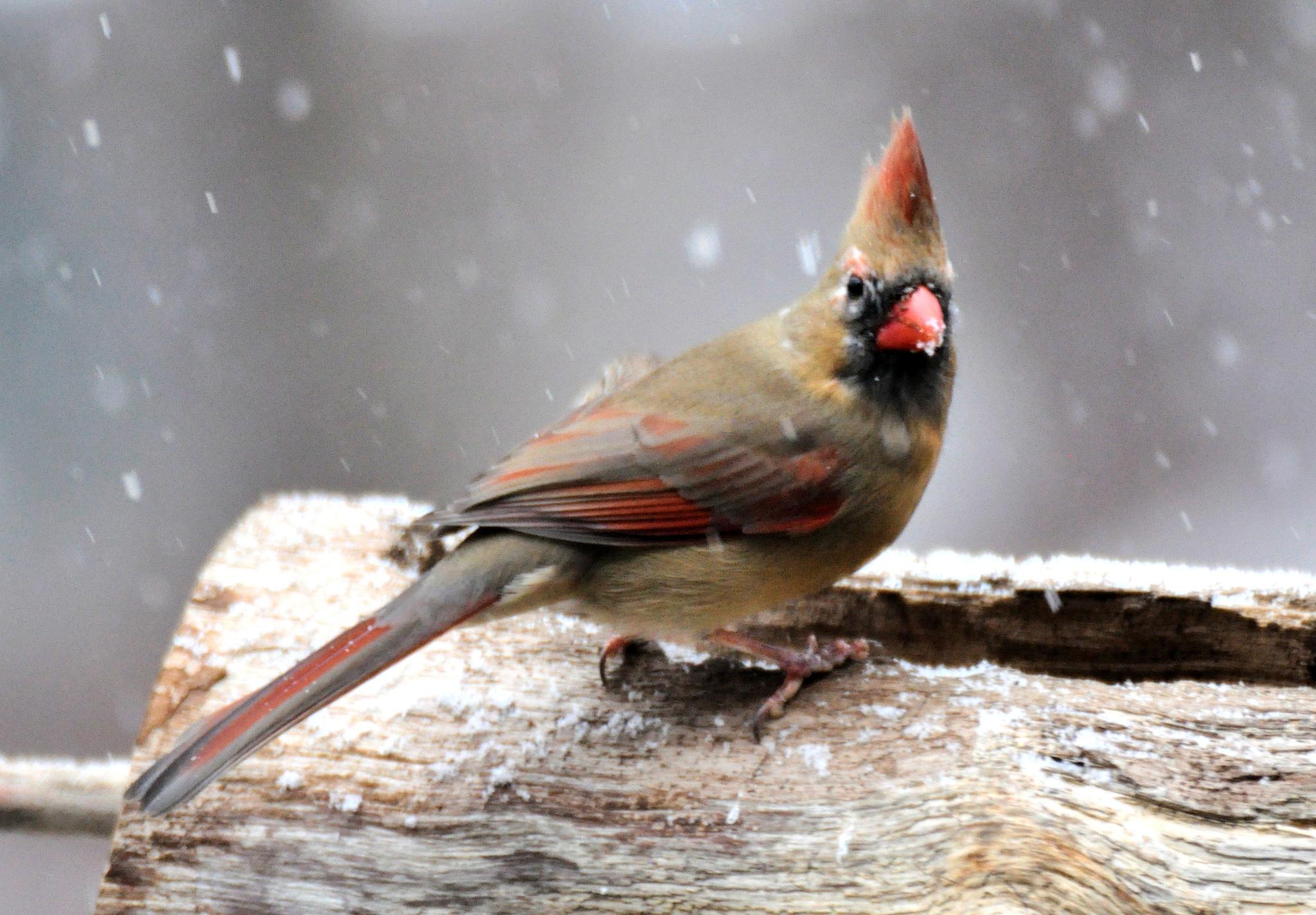 Wet Snow by Joeski