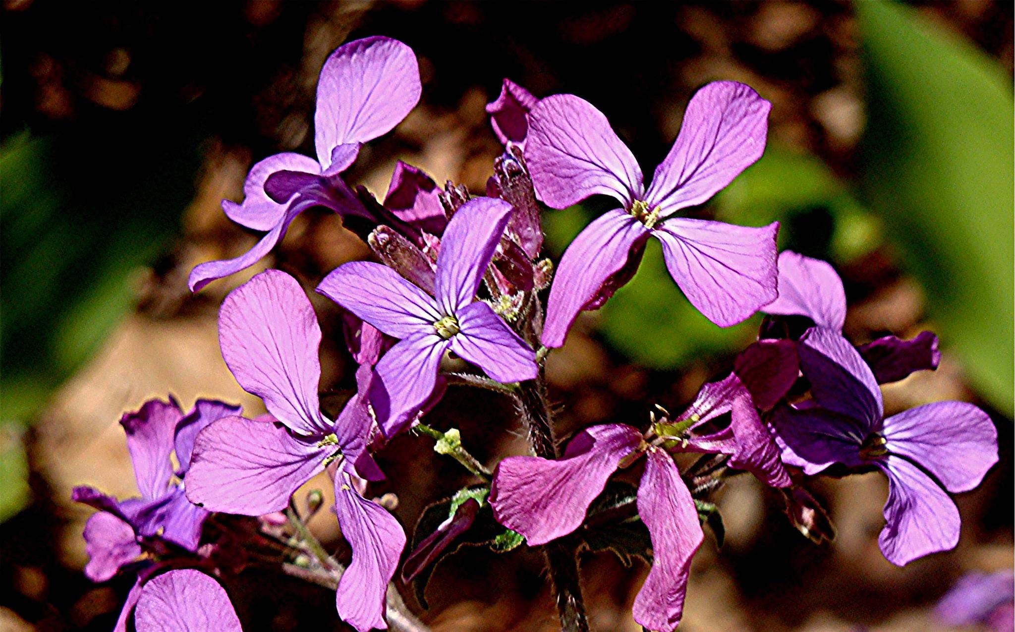Purple Passion by Joeski