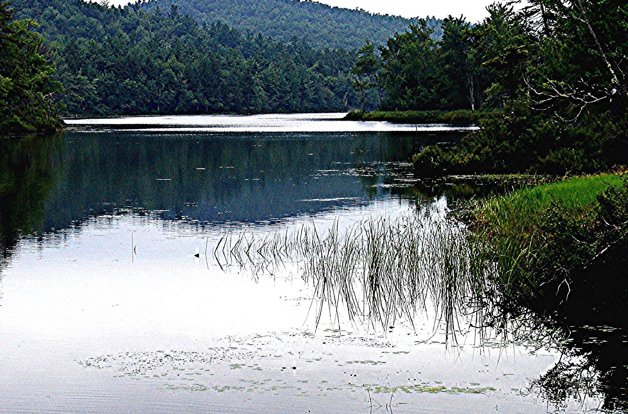 Quiet Waters by Joeski