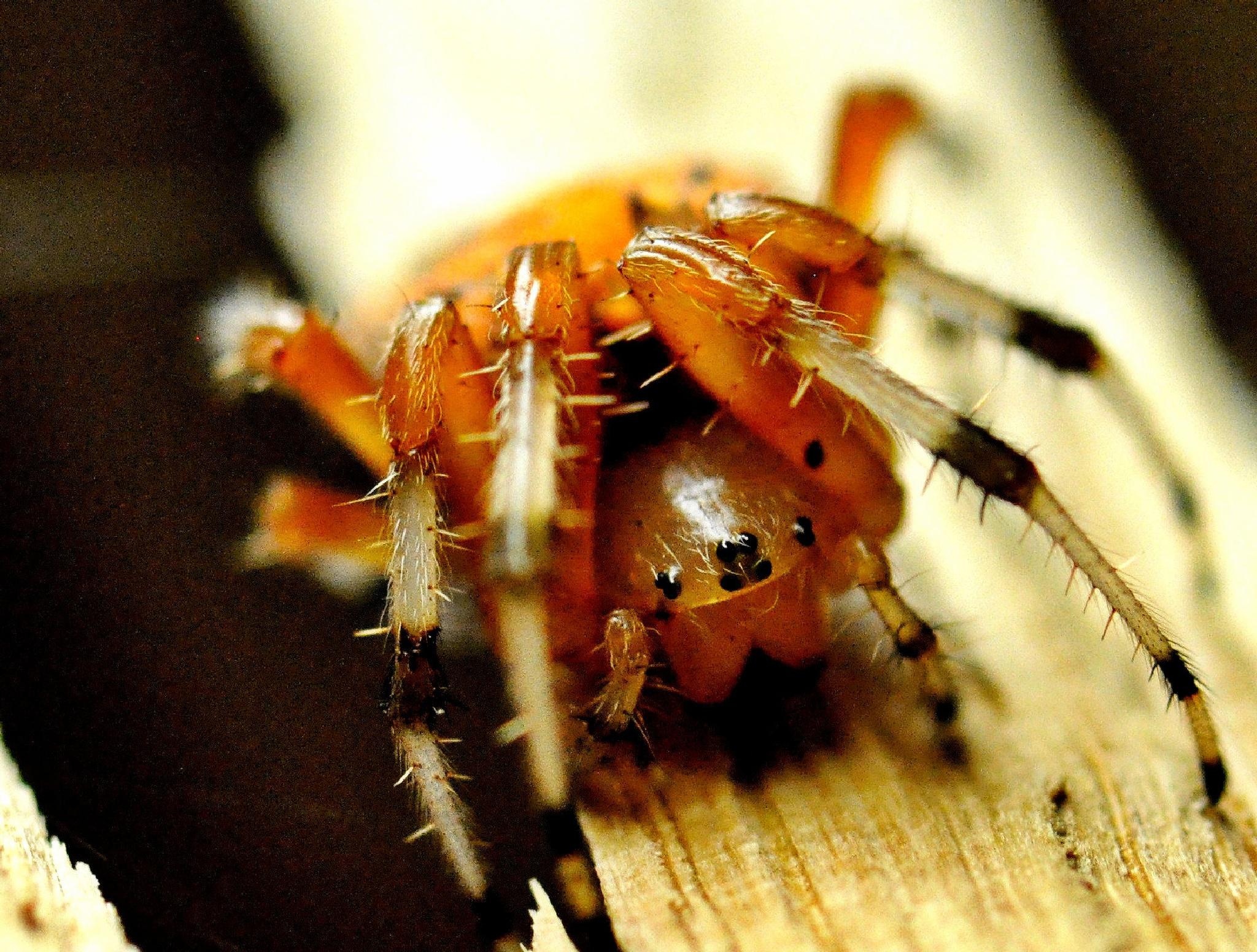 Spider Eyes by Joeski